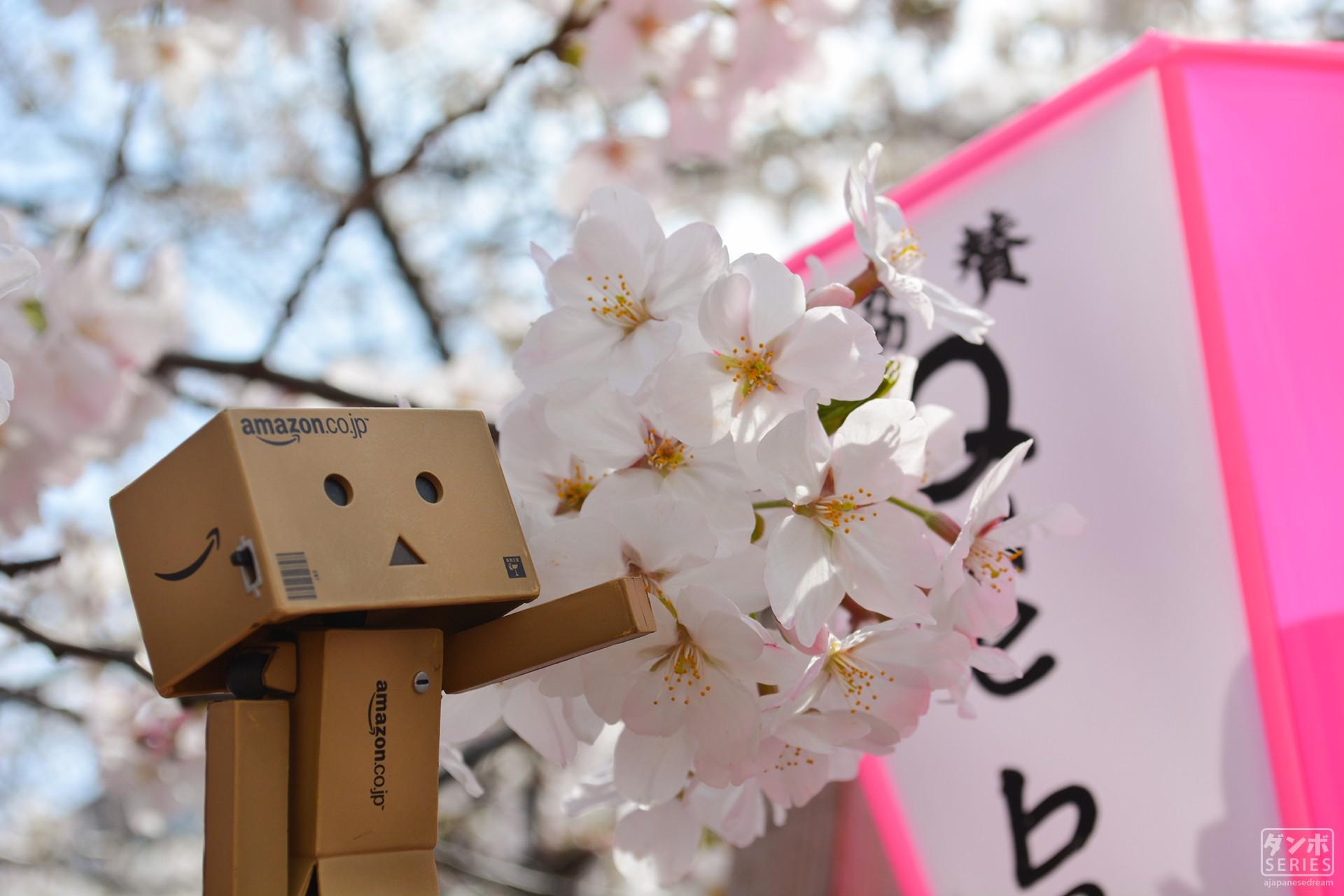 1920x1280 px, Amazon, cherry blossom ...