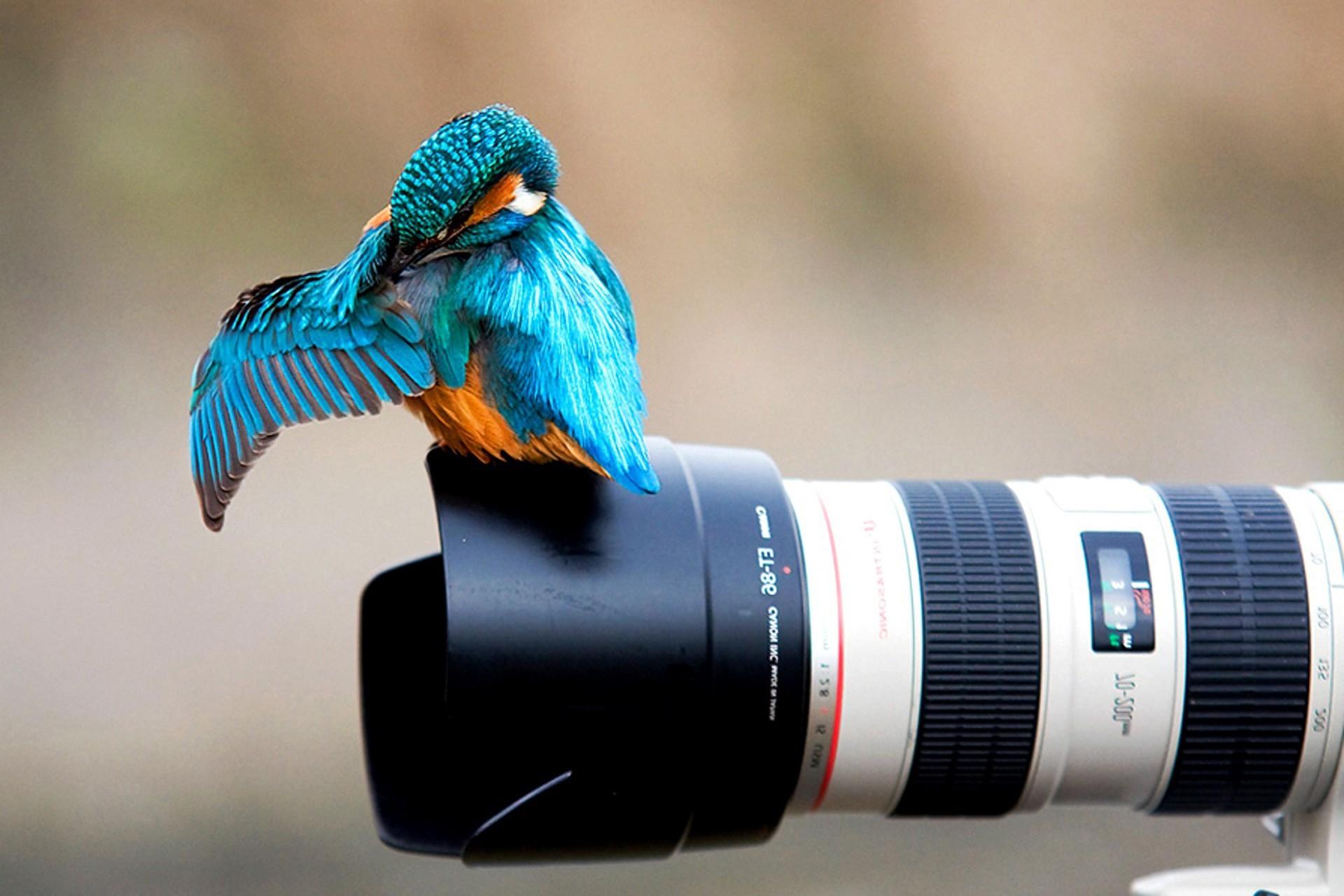 Wallpaper 1920x1280 Px Animals Birds Camera Canon Colibri