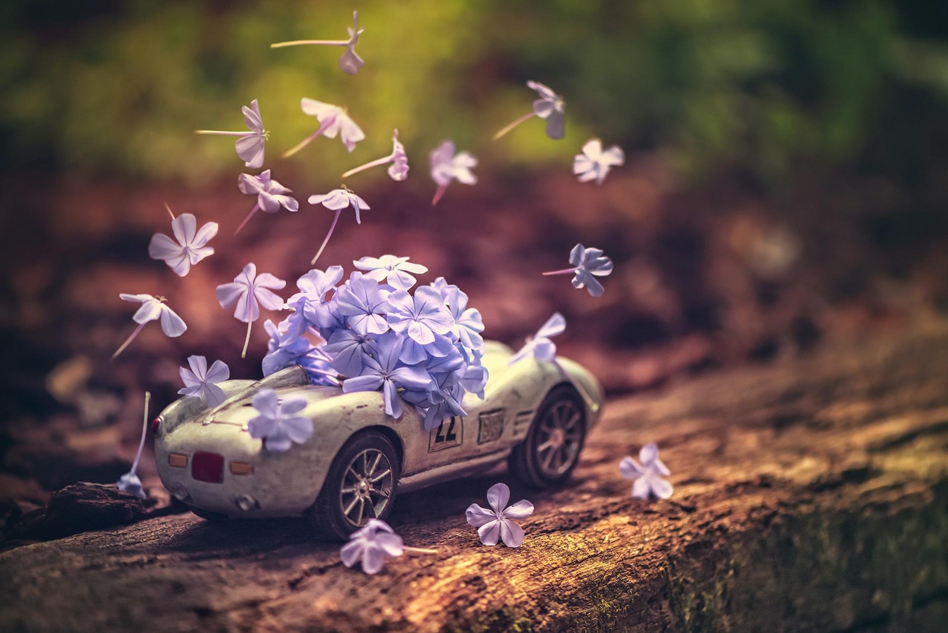 Открытки с цветами в авто, знак