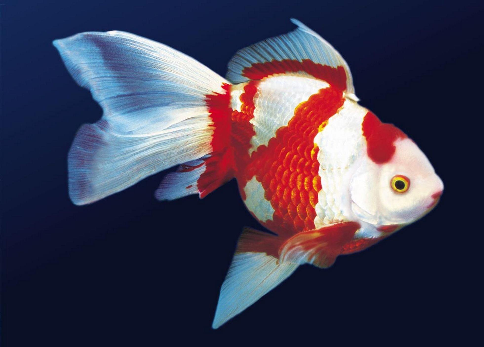 ветер трех рыбы картинки домашние животные женой планировал