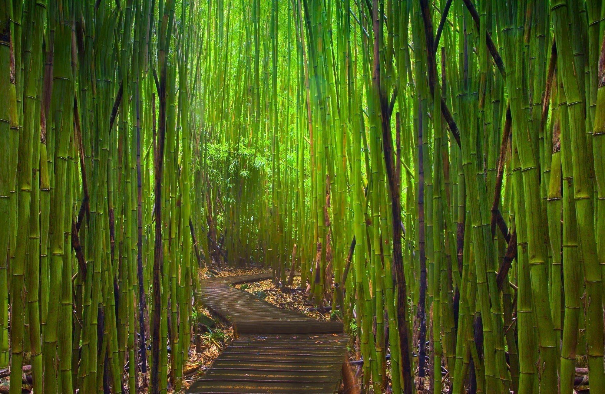 Hintergrundbilder 1998x1302 Px Bambus Japanischer Garten