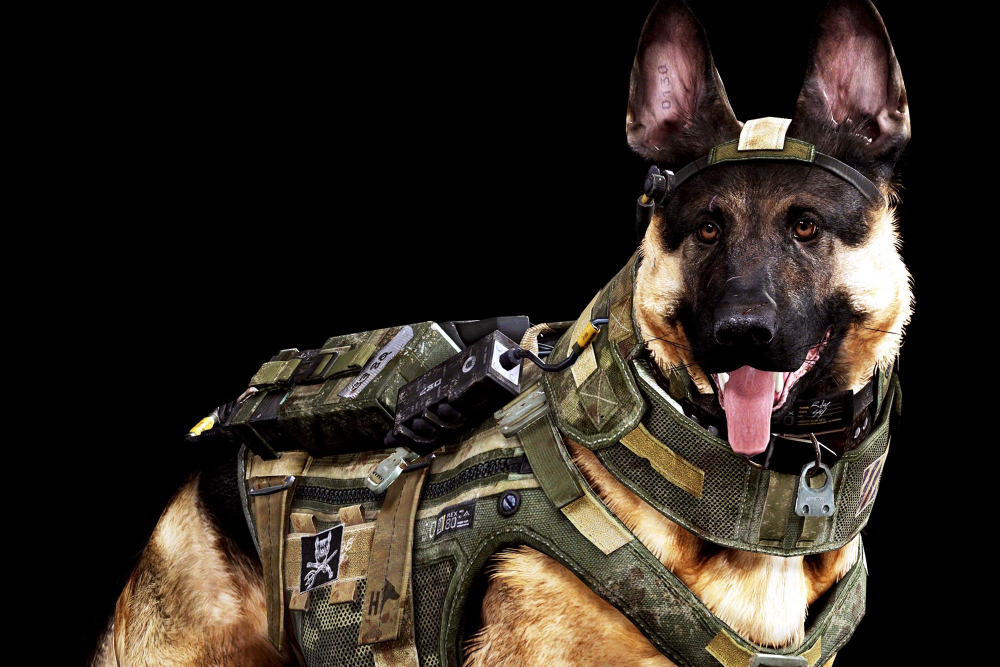 Wallpaper 2000x1334 px army dogs German Shepherd sol r