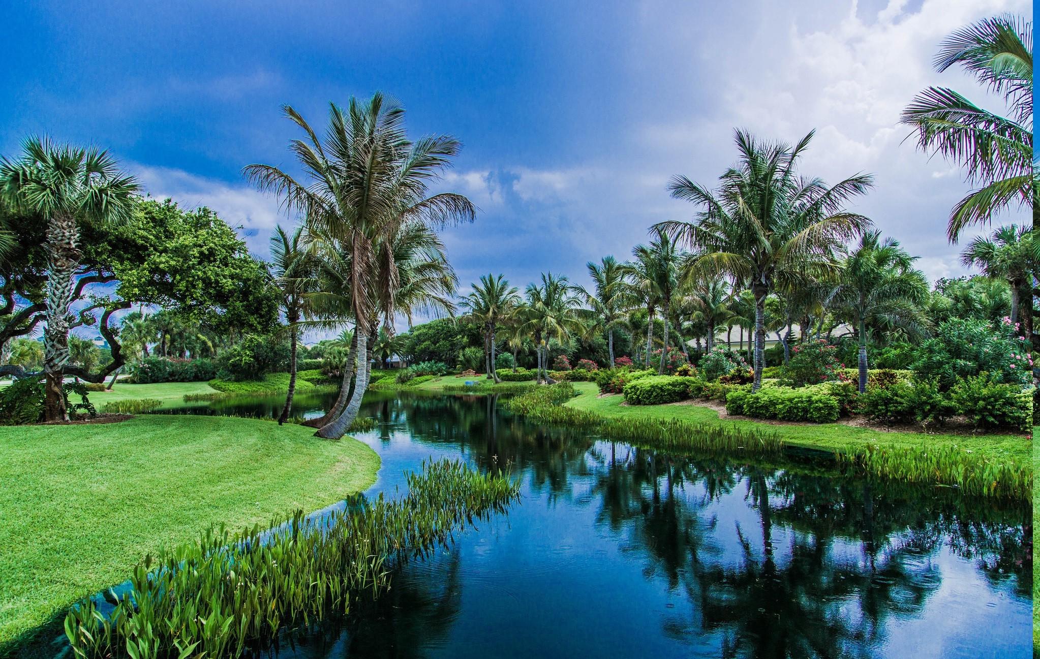 фото красивого леса с пальмами чтобы был