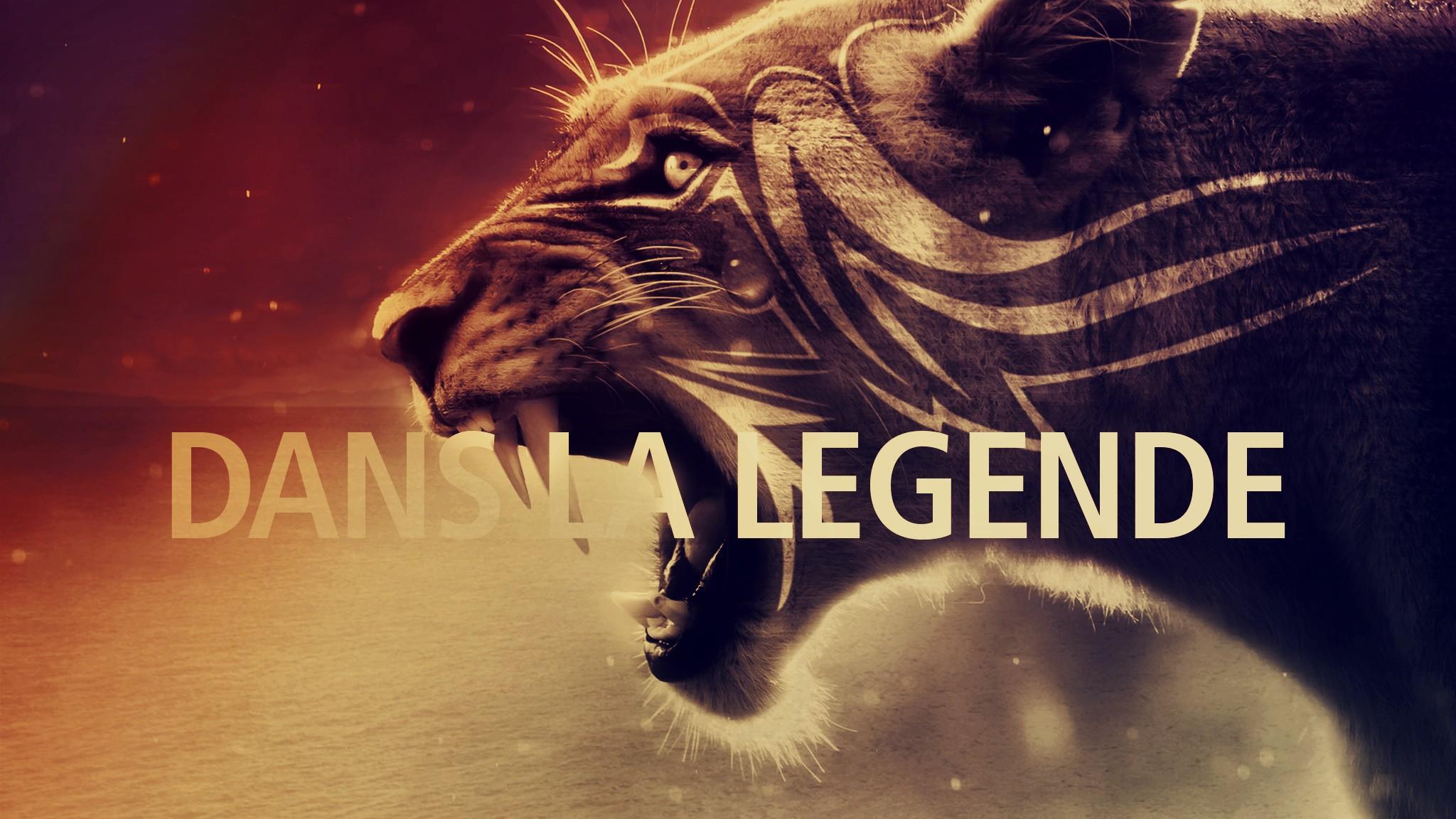 Fondos De Pantalla 2048x1152 Px Animales León Tigre