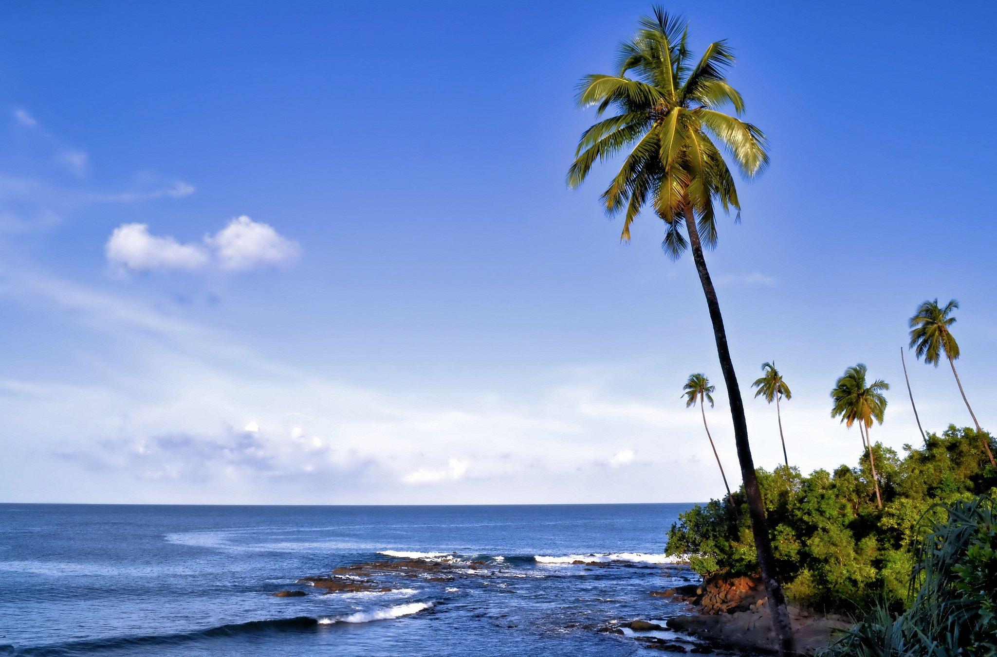 Картинки пальмы острова море