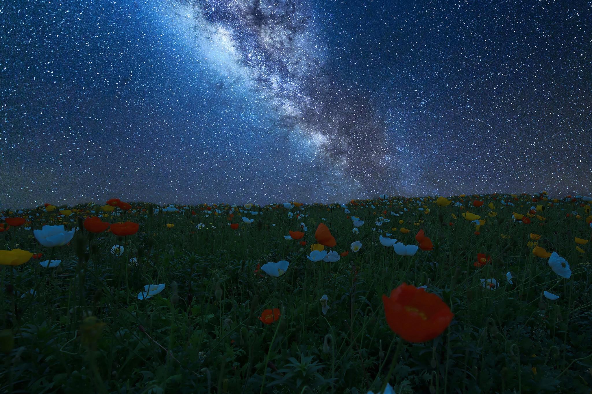 Фото природа космос цветы