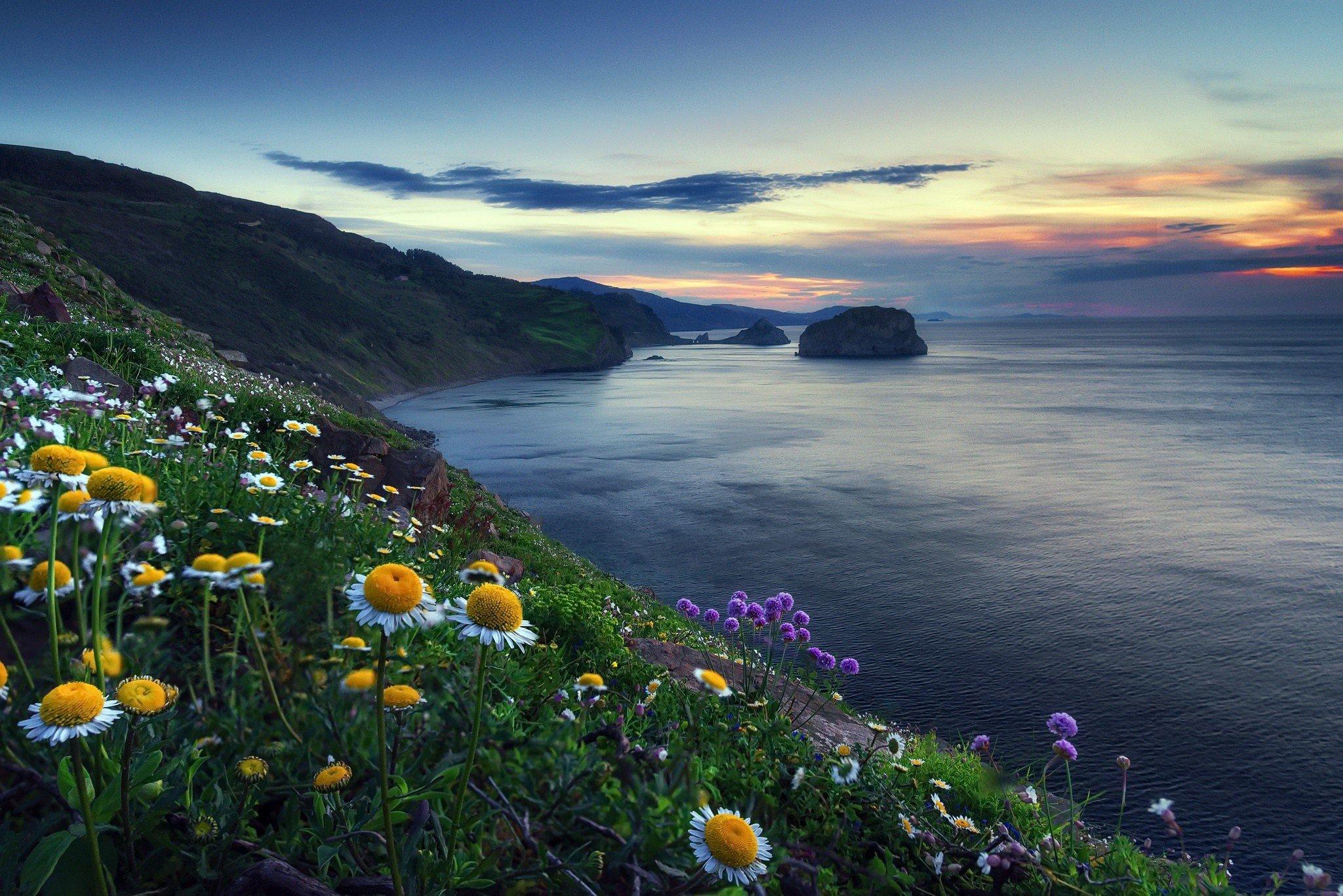 героя цветы на побережье фото многое будет