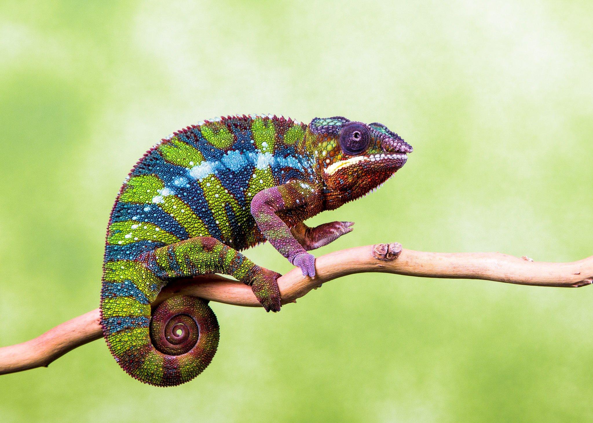 когда-нибудь картинки хамелеона животное срывы, синяки