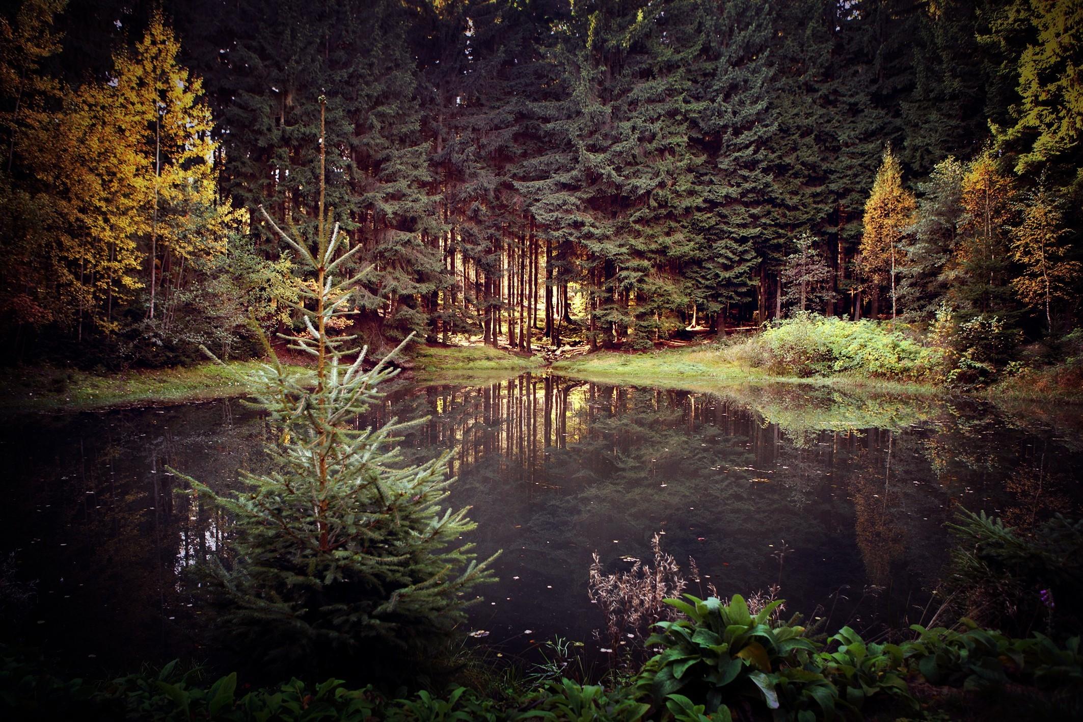 красивые картинки с лесом и водой настоящие фото декоративного
