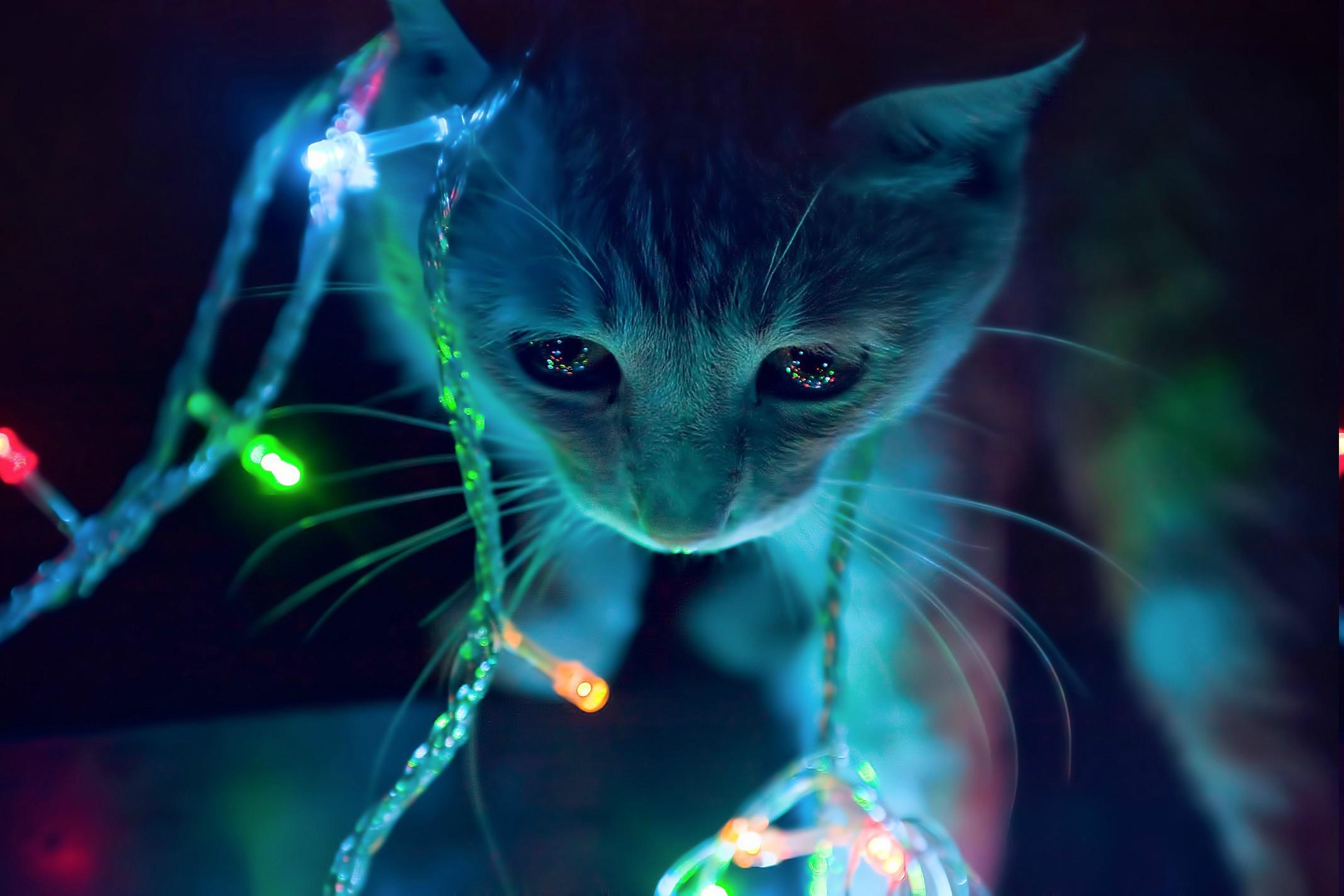Wallpaper  2136x1424 px, animals, cats, christmas lights