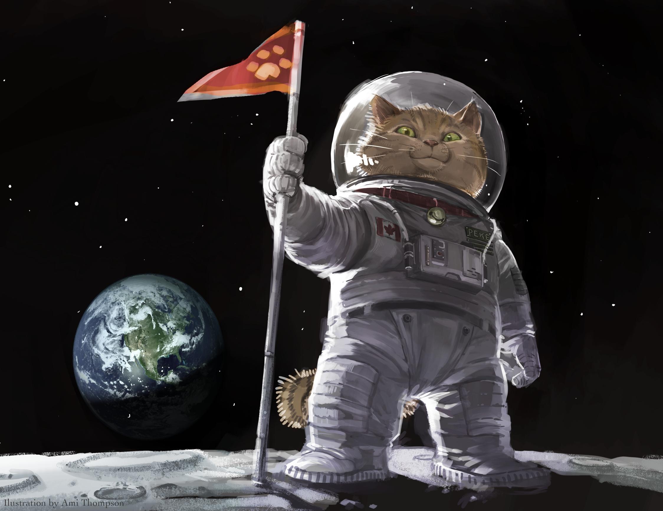 2248x1734 px, ami, cat, humor, original ...