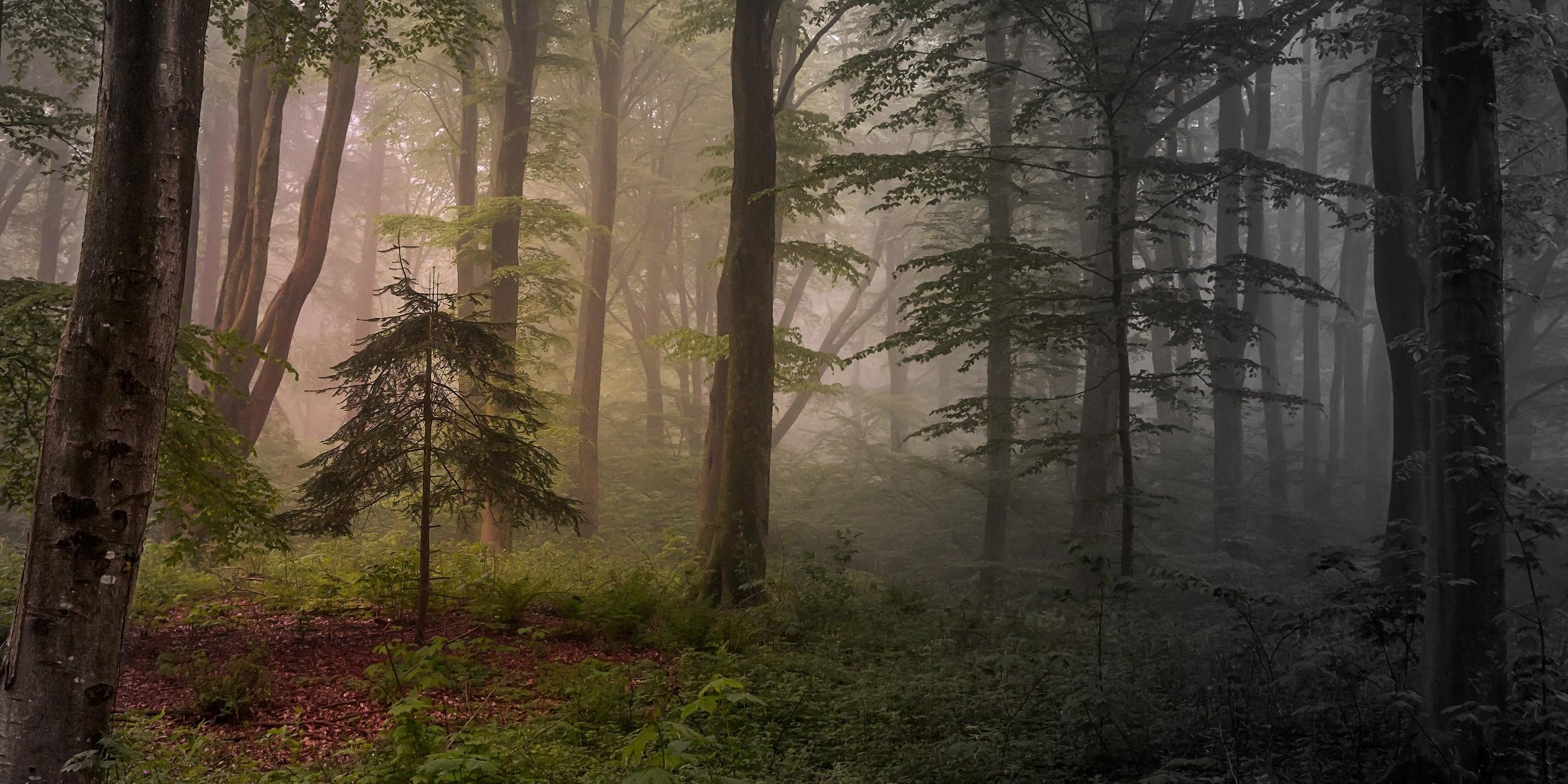 обои на рабочий стол лес в тумане мрачноватый штукатурки это