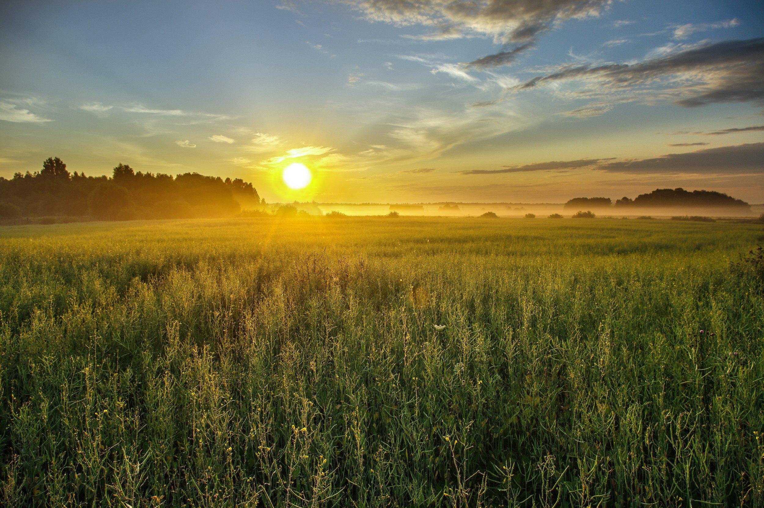 картинке восход солнца в поле фото хочу