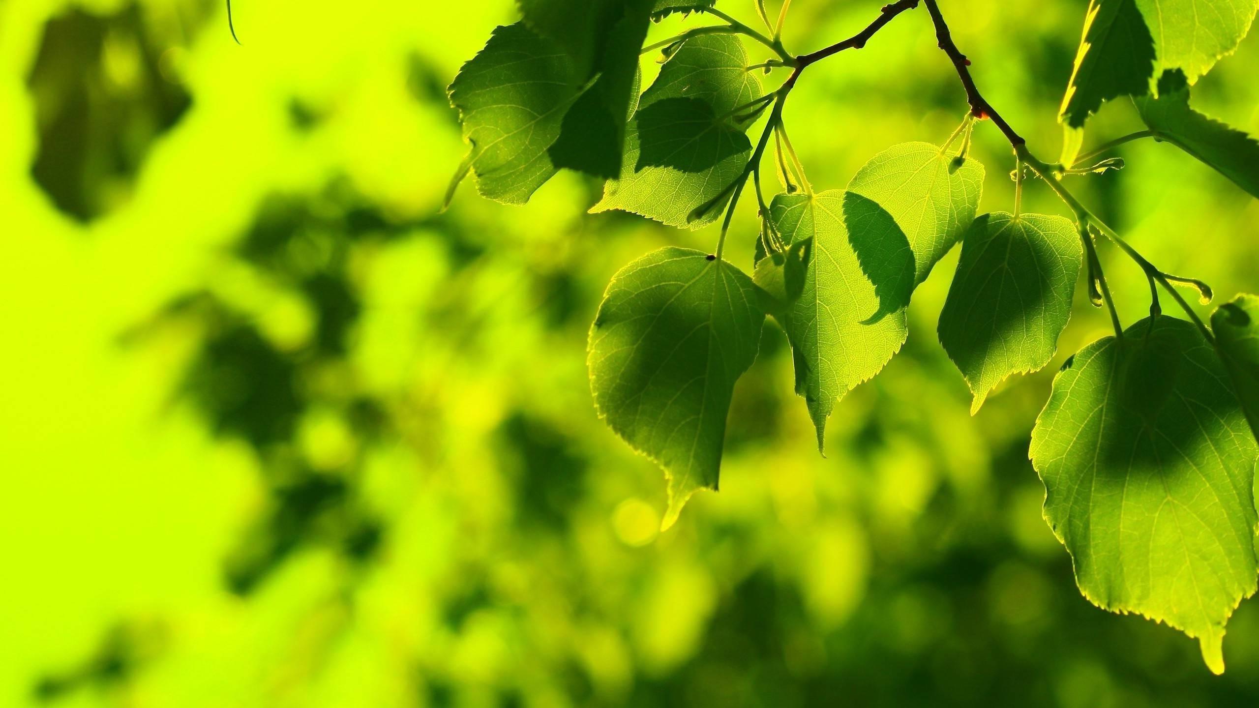подавать картинки природа листочки покрывало
