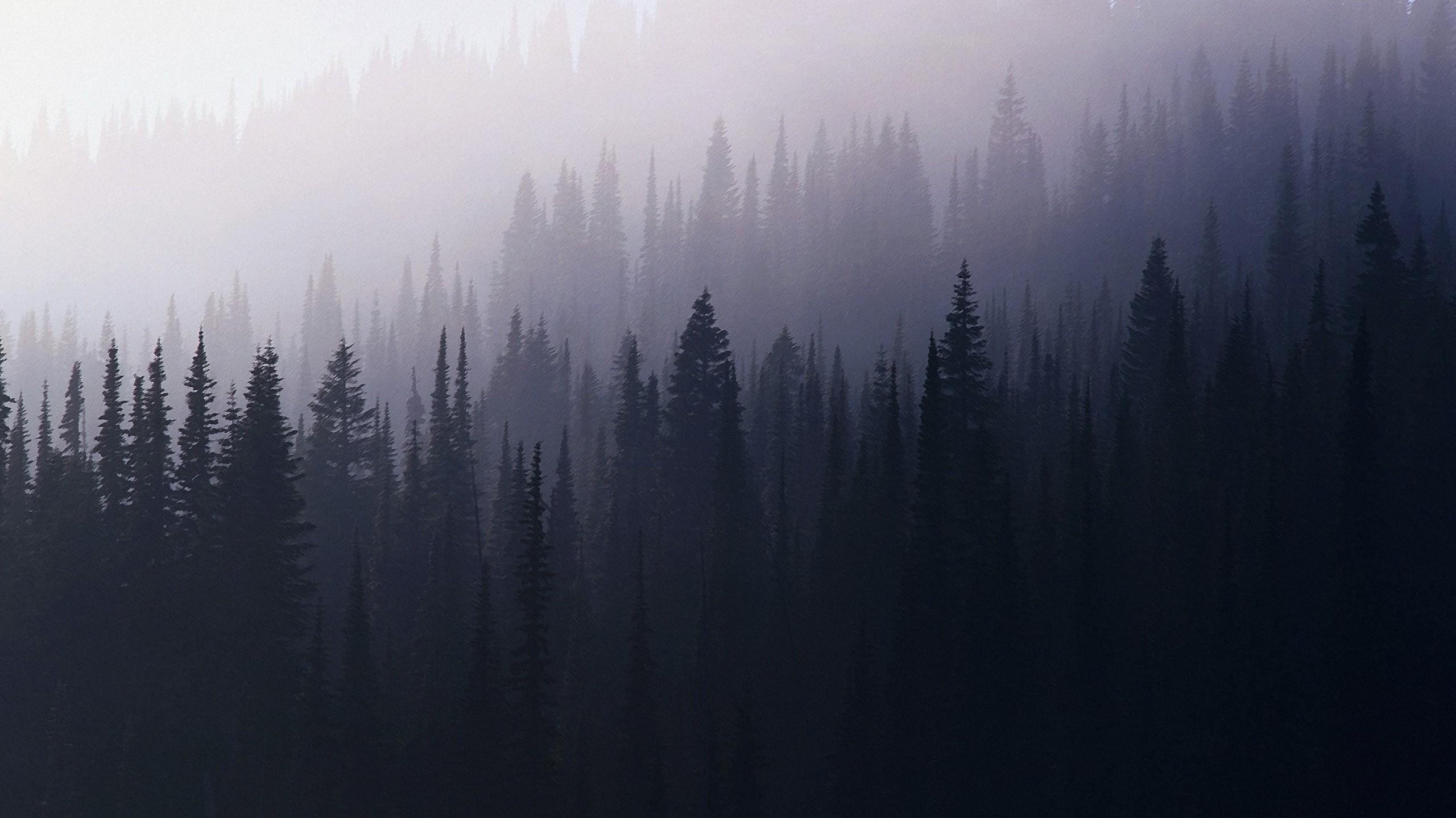 обои на рабочий стол лес в тумане hd № 251999 загрузить
