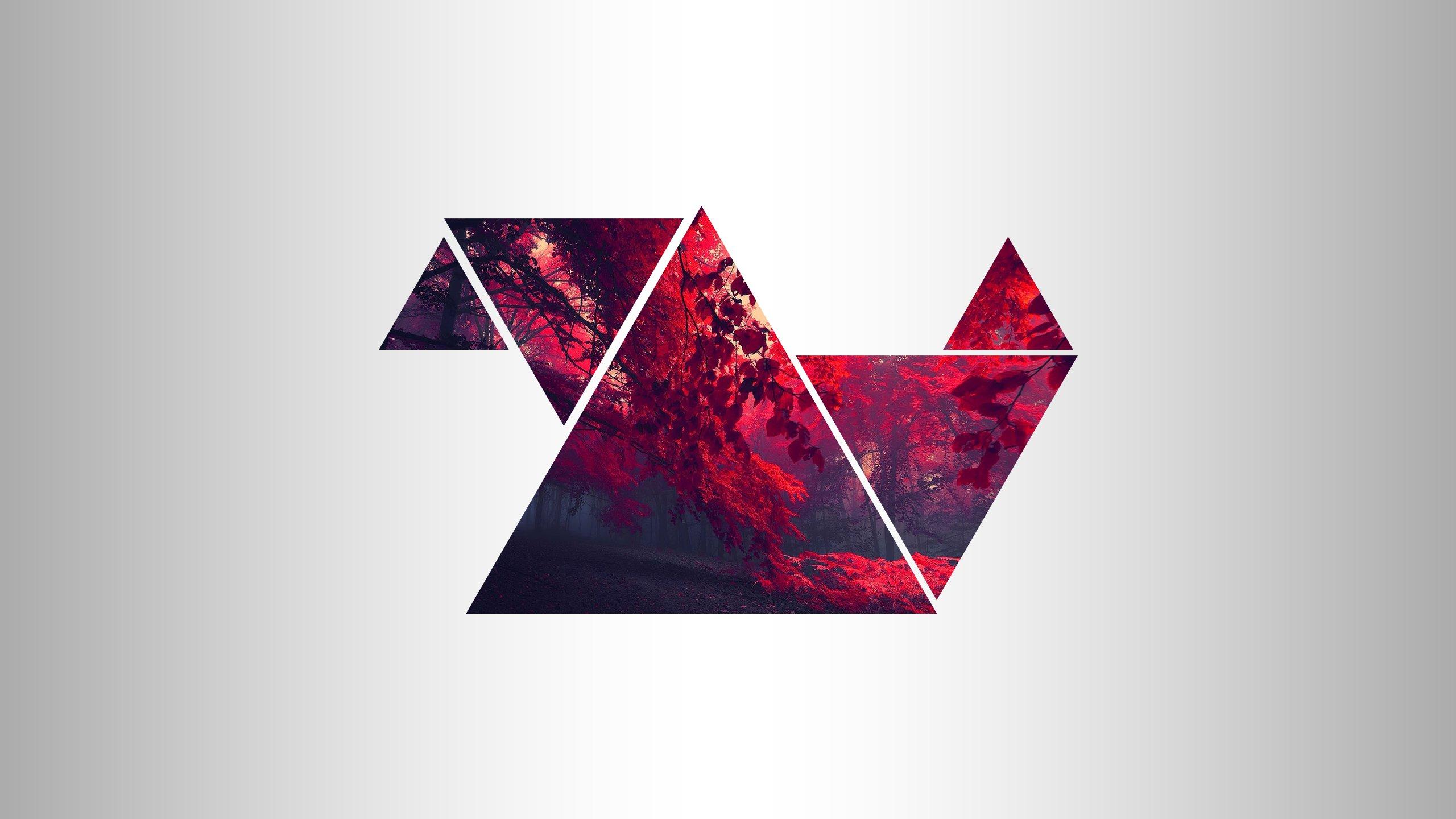 Fond Décran 2560x1440 Px Forêt Rouge Triangle