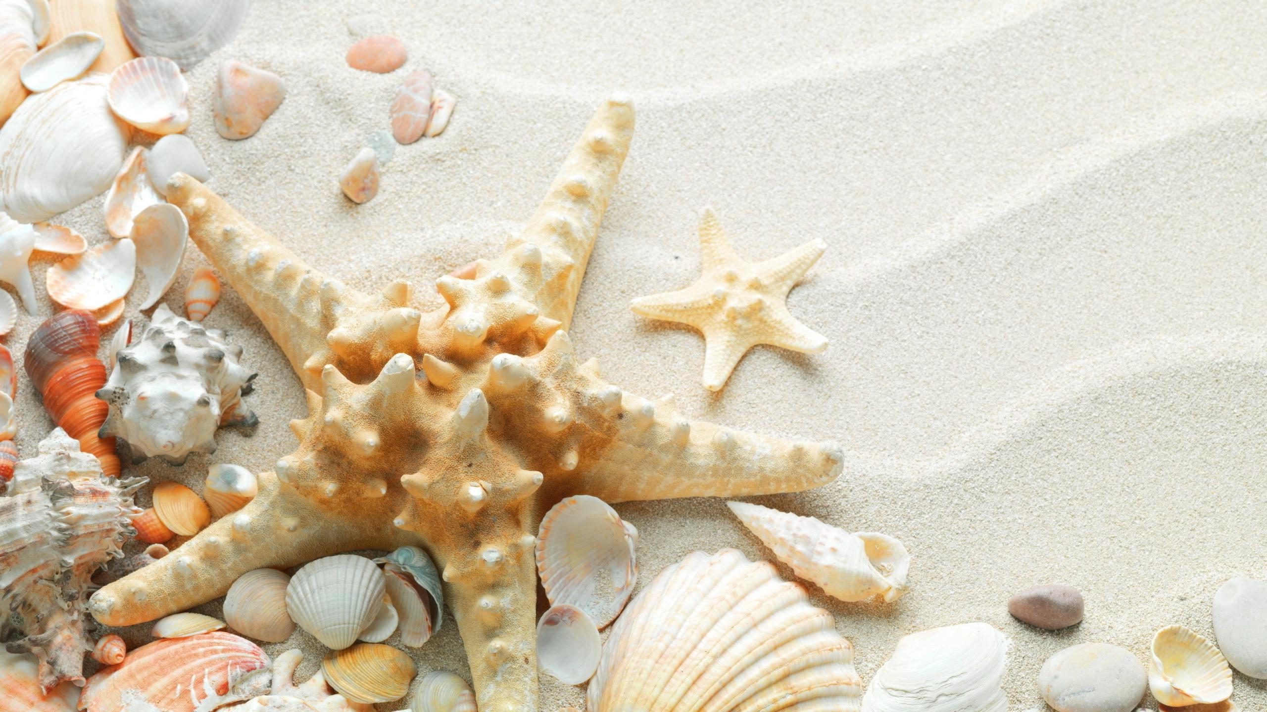 Красивые фото песок и раковины