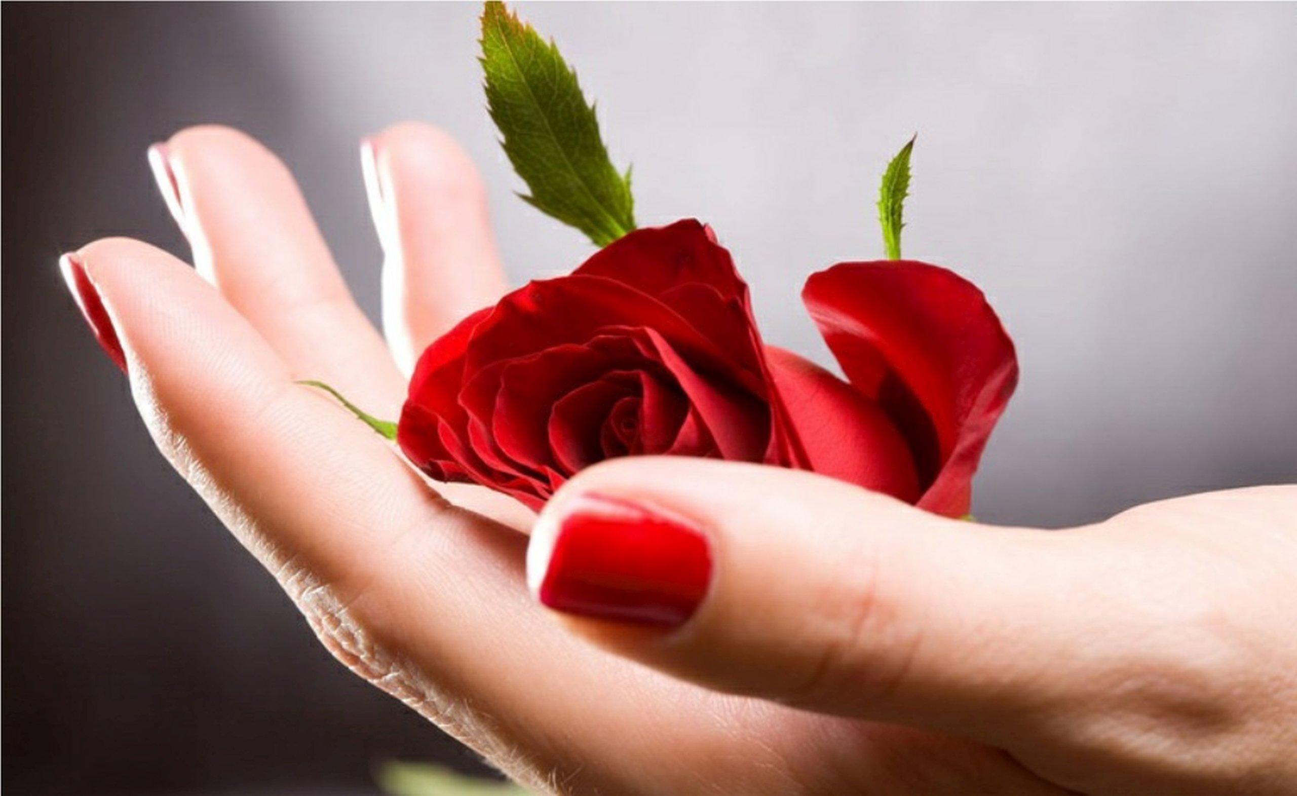 Роза в ладошках картинка
