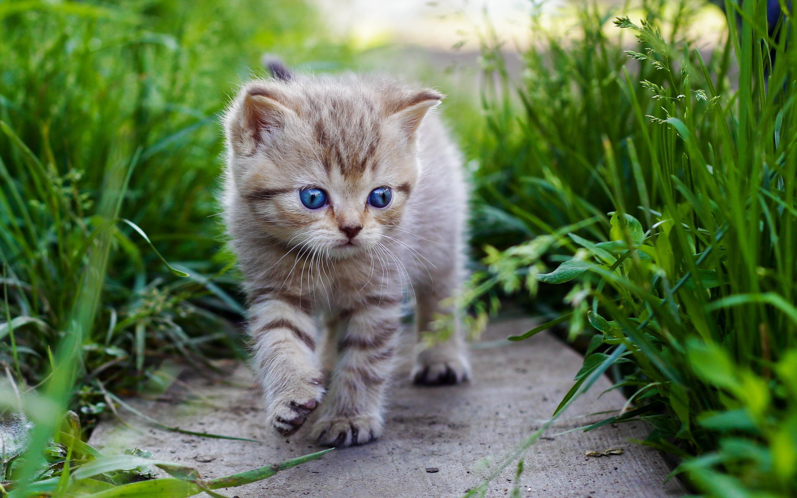 Wallpaper 2560x1600 Px Animals Baby Cat Cats Cute Eyes Grass Kitten Kittens 2560x1600 Goodfon 1903375 Hd Wallpapers Wallhere