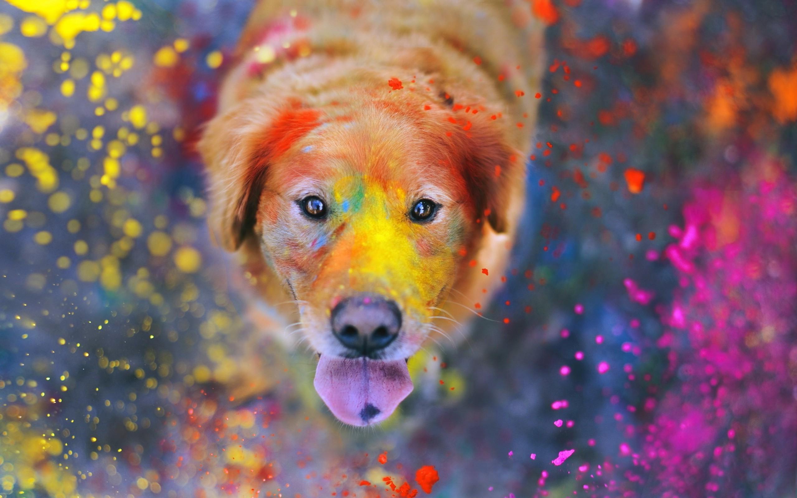 Masaüstü 2560x1600 Piksel Hayvanlar Renkli Köpek Labrador