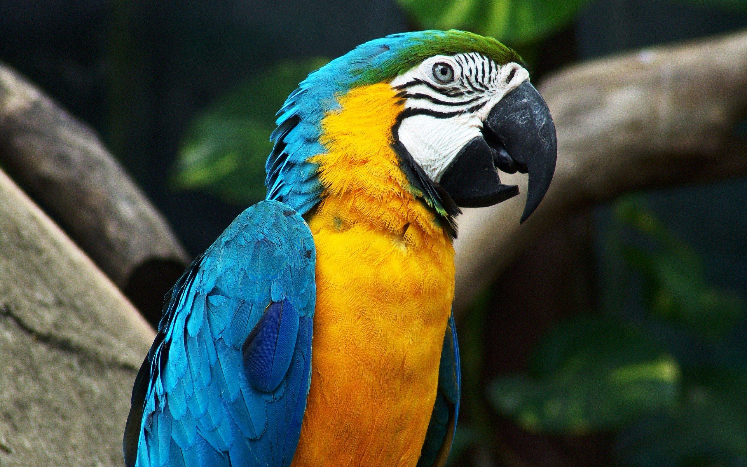 Wallpaper 2560x1600 Px Birds Macaws 2560x1600 Wallhaven 1336139 Hd Wallpapers Wallhere