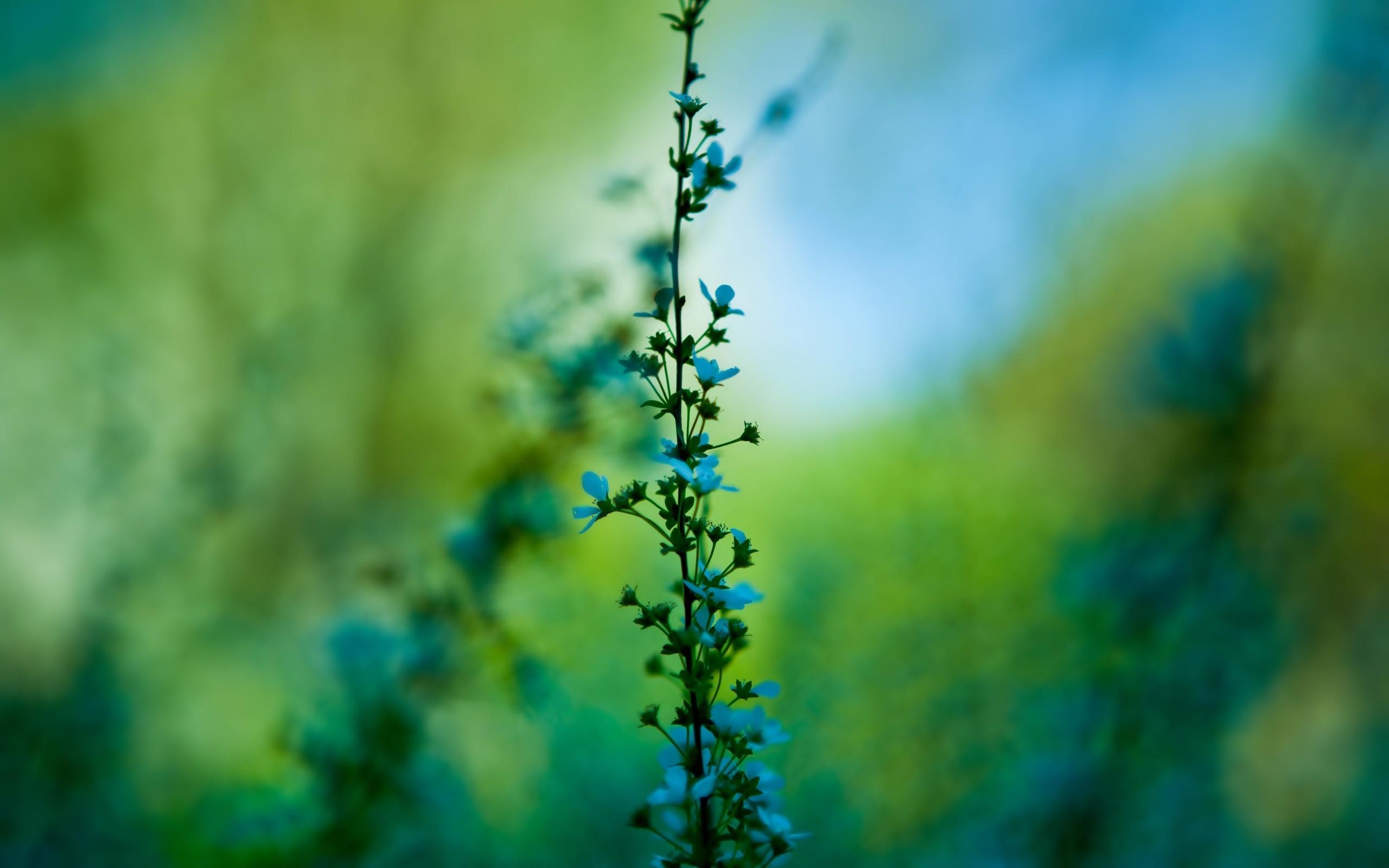 Wallpaper 2560x1600 px blue flowers blurred nature plants 2560x1600 px blue flowers blurred flowers nature plants mightylinksfo