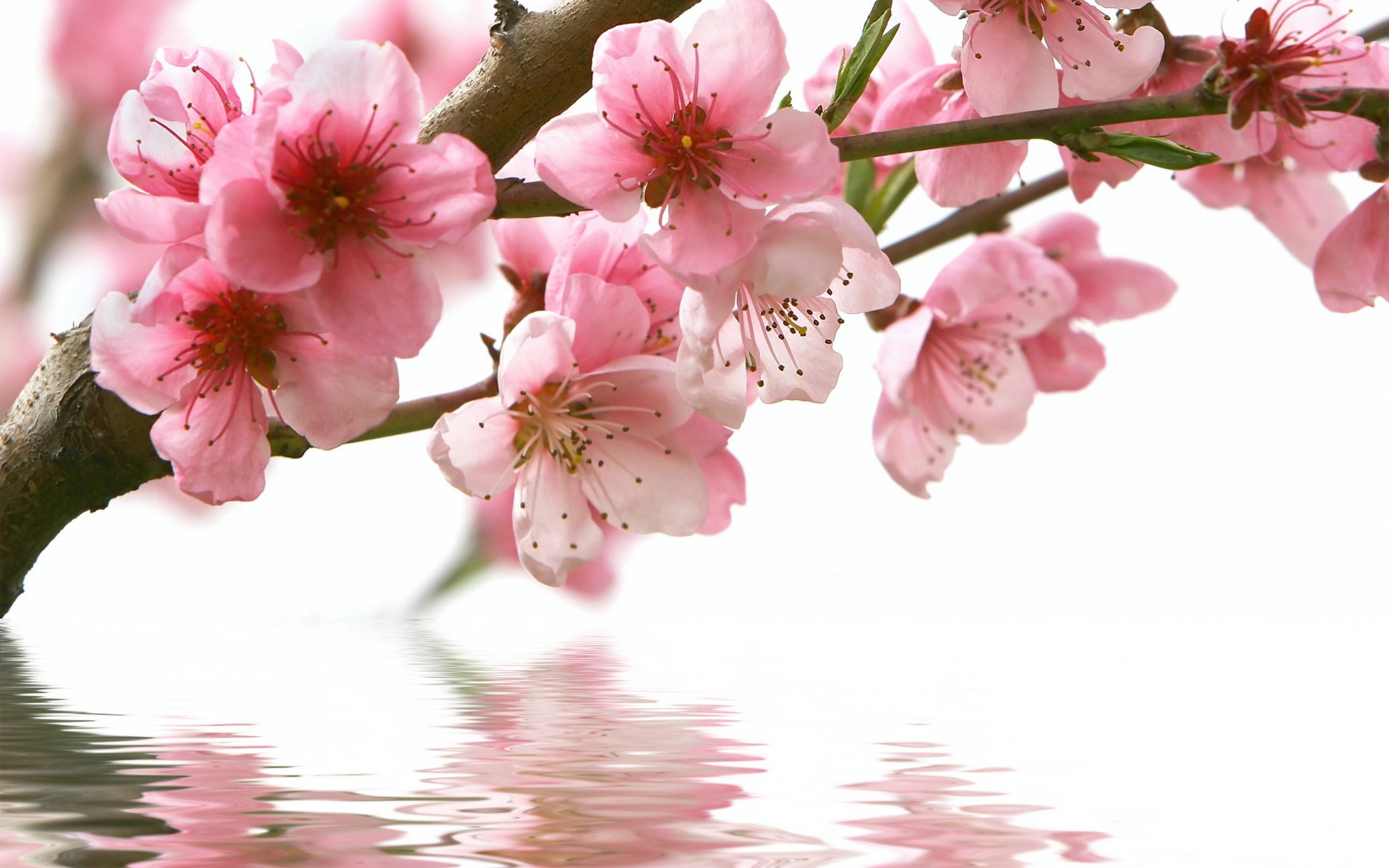 упасть гифки красивые картинки цветение веточки опадали