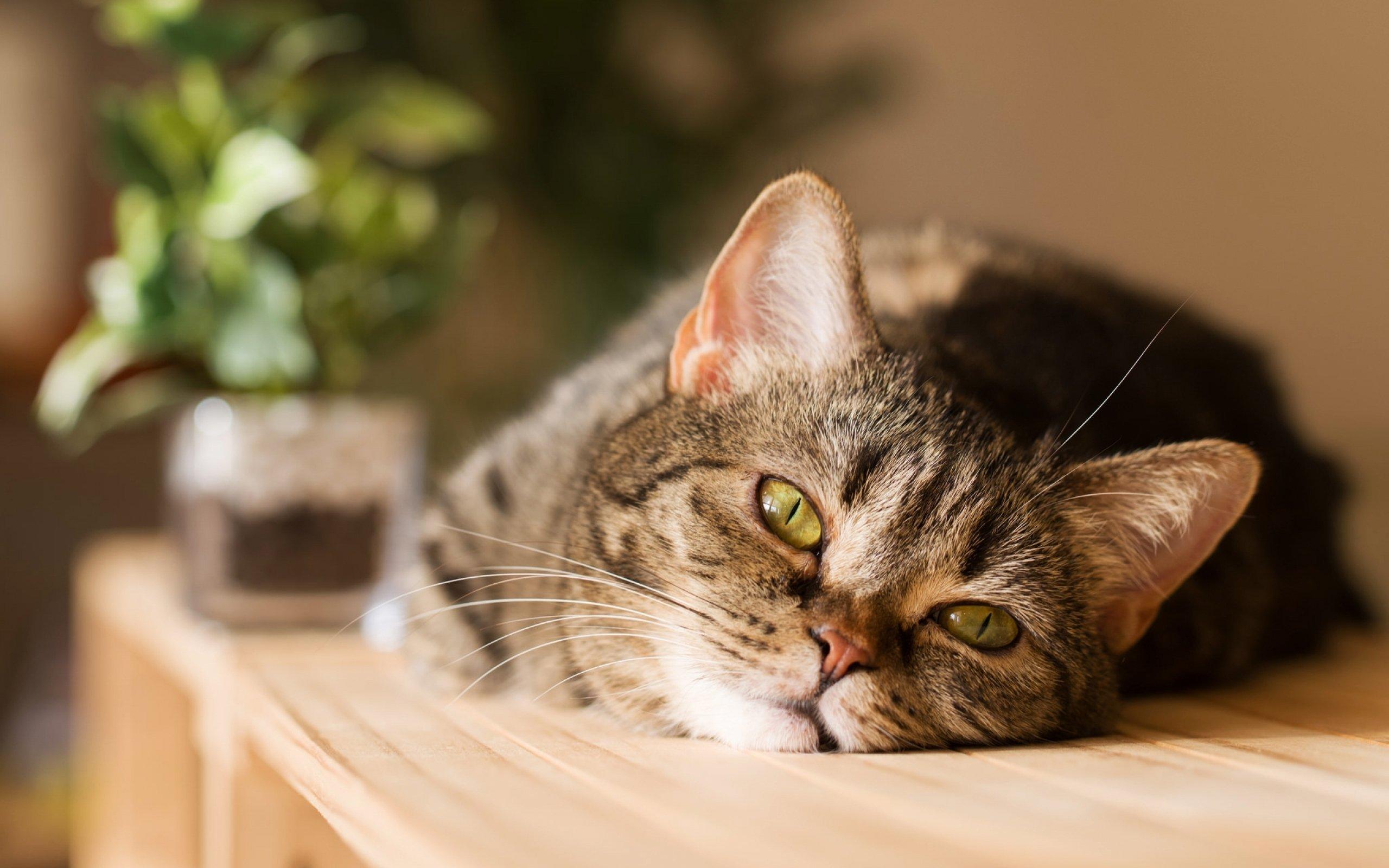 фото кошек с картинками радиоламп постоянно