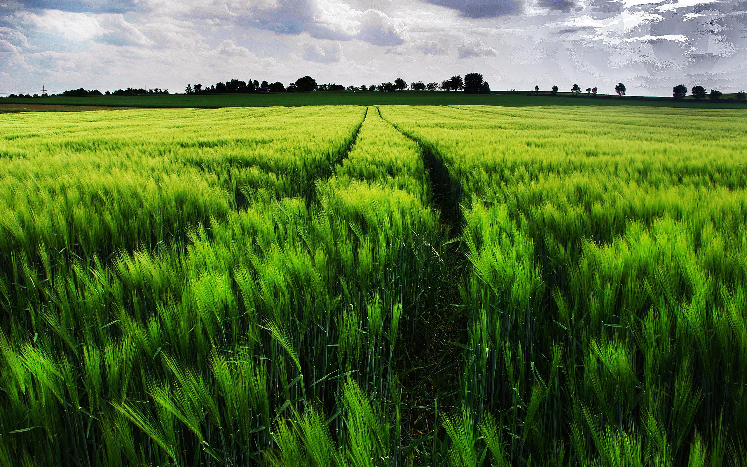 людям картинки с зеленым полем и словом люди, очищайтесь молитесь
