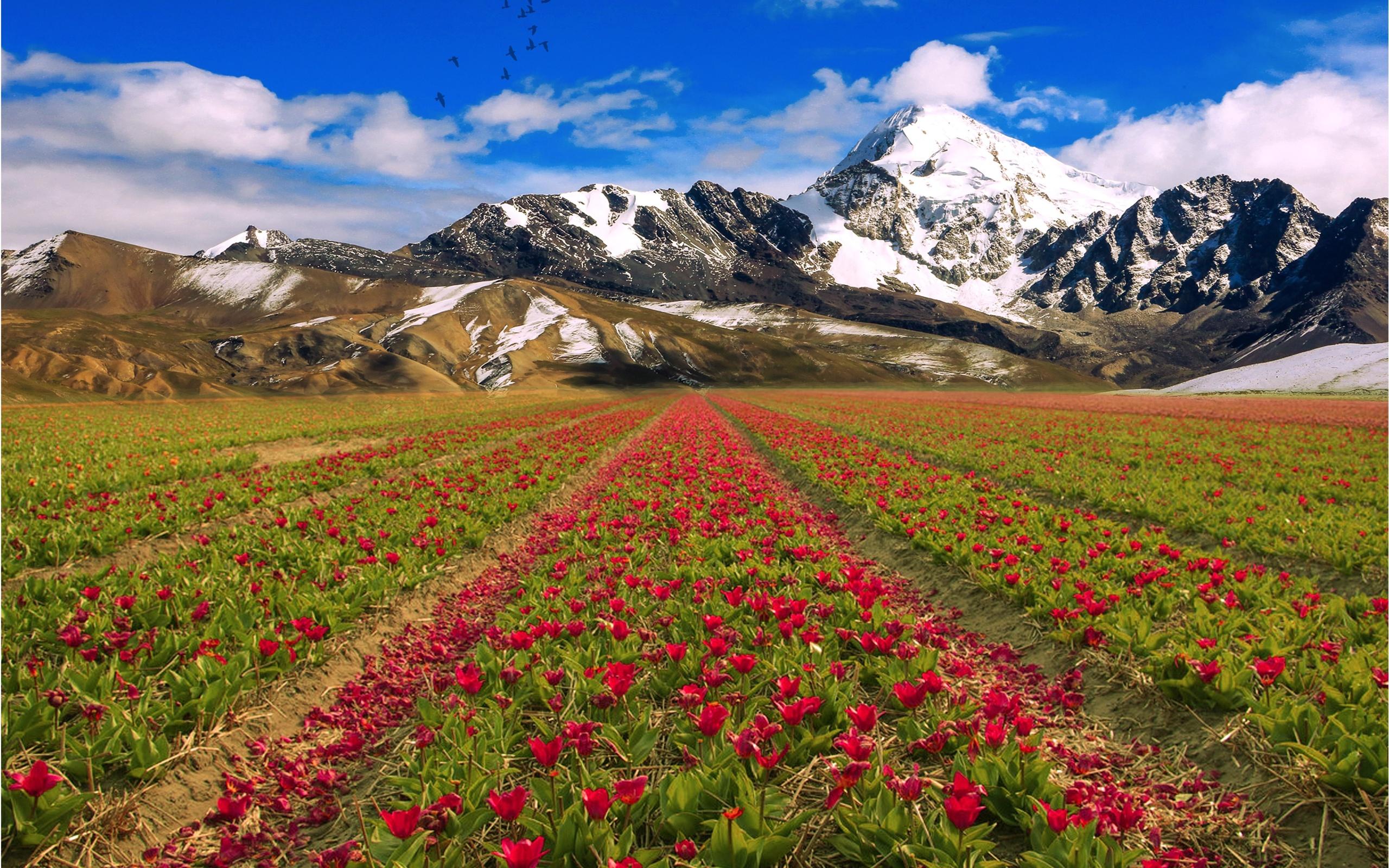 настоящее красивые горные пейзажи весна с тюльпанами фото навязали оплатить