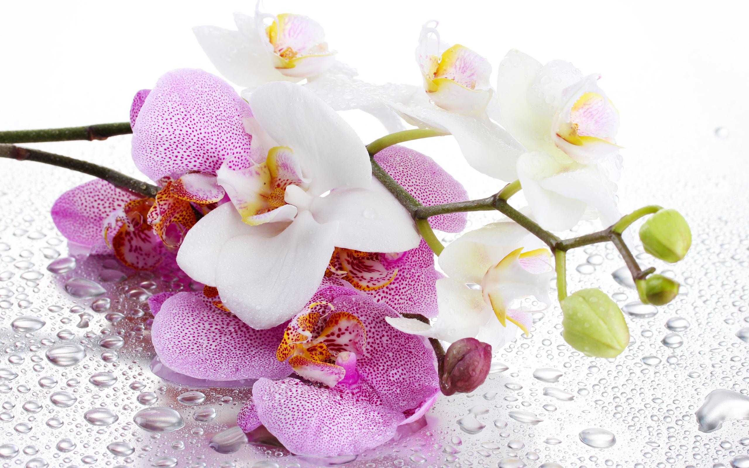 фото картинки орхидей натуре