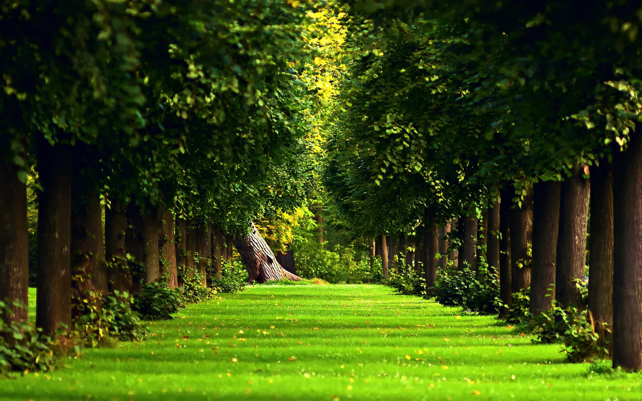 Masaüstü 2560x1600 Piksel Orman Manzara Doğa Yol Basit Arka