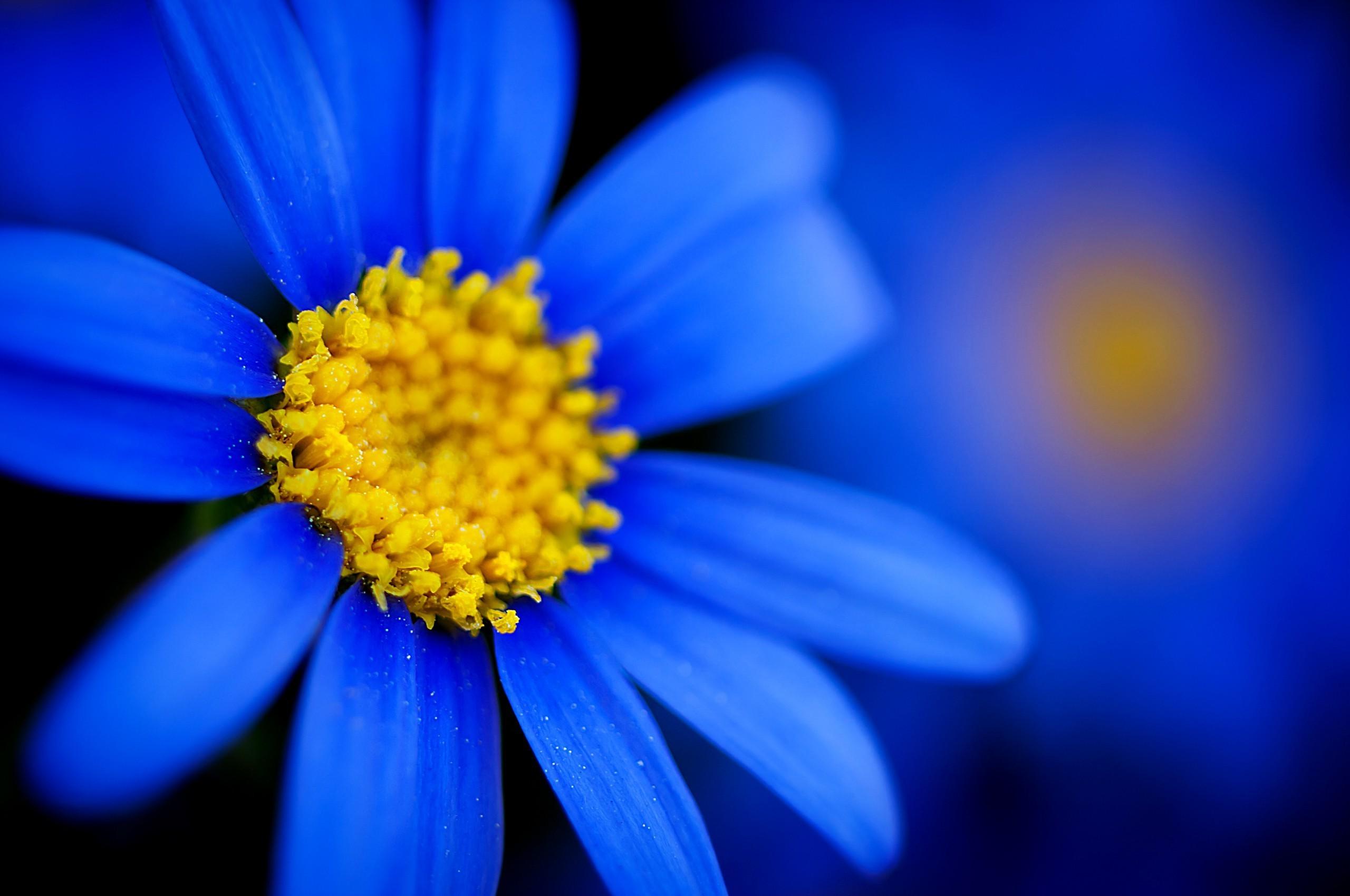 24+ Blue Flower Wallpaper Hd Download Images