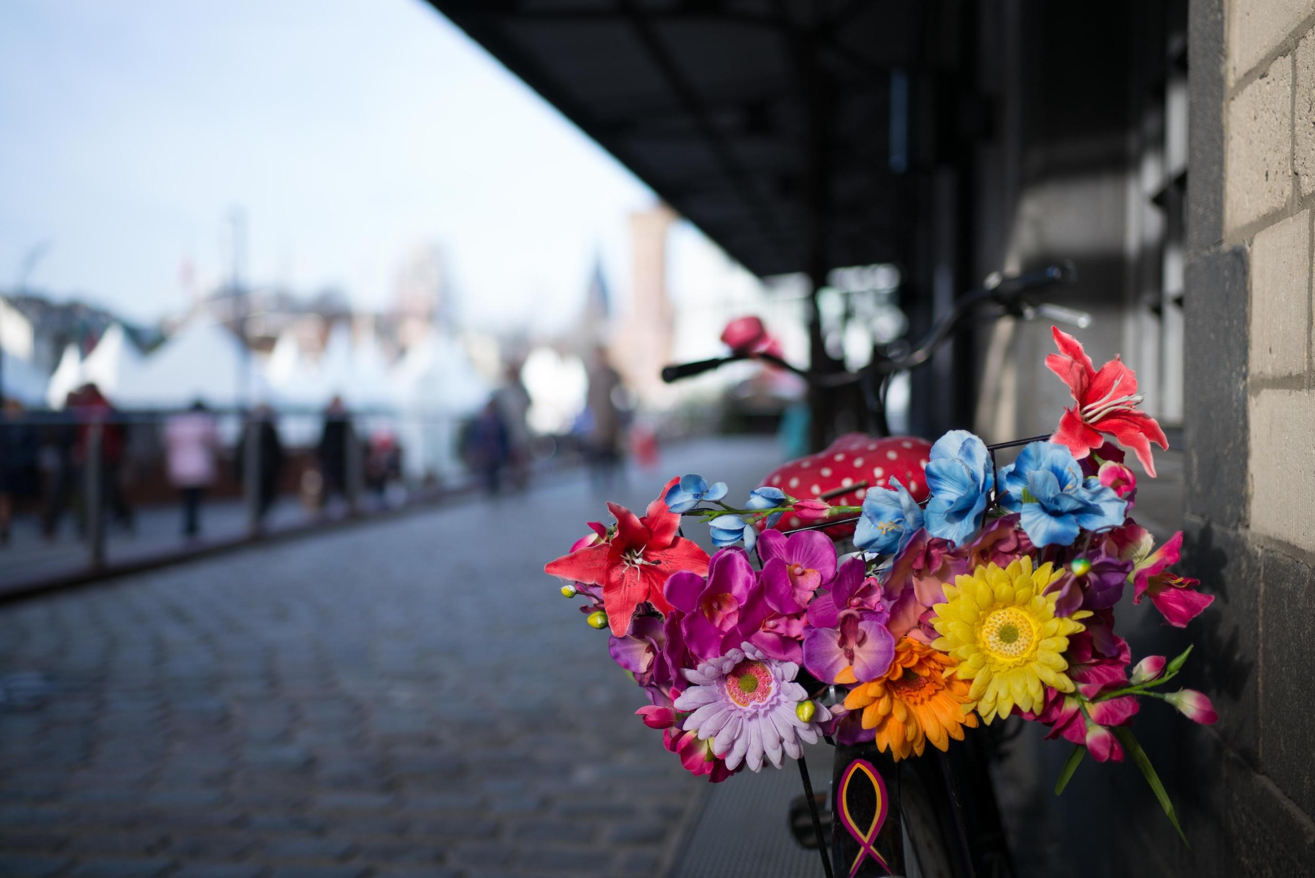 доказал, картинки цветы городские цветы развода александром замуж
