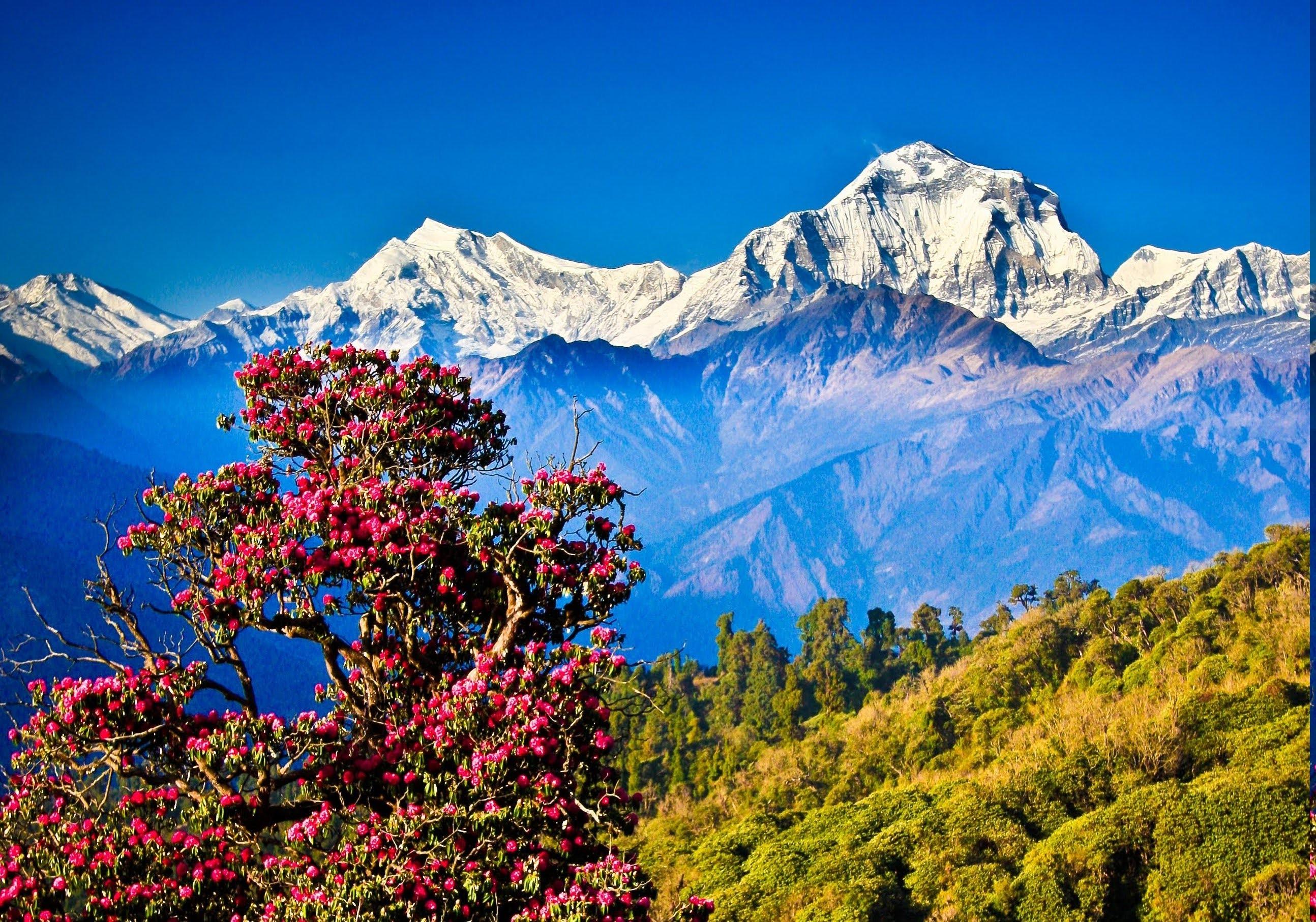 Картинки индия горы