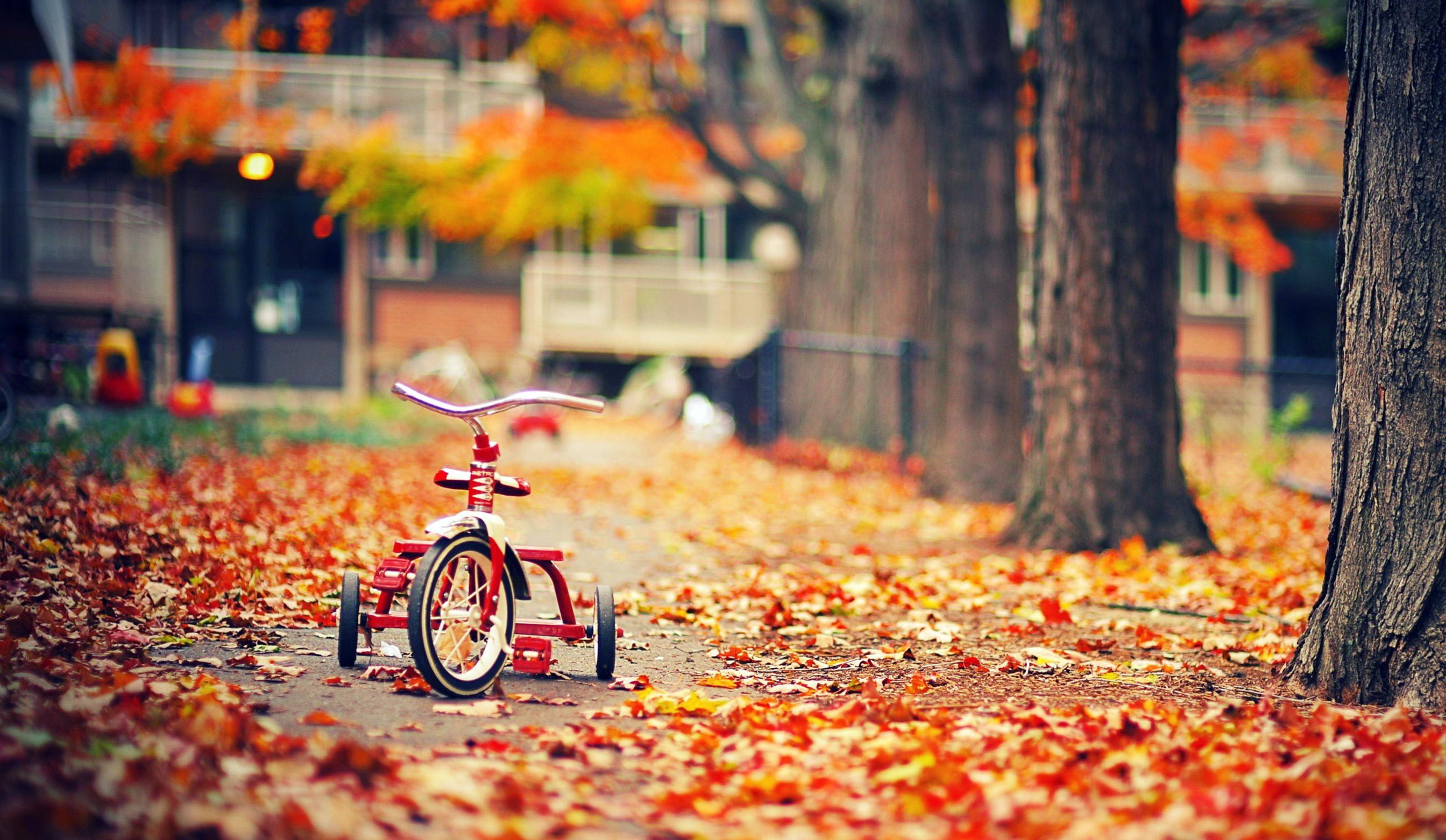 Hình nền : 2688x1562 px, Hình nền mùa thu, Hình ảnh thành phố, Cityscapes, Phong cảnh, Hình ảnh tình yêu, Yêu hình nền, Đặt hình nền, Ảnh mùa, các mùa, Ảnh ...