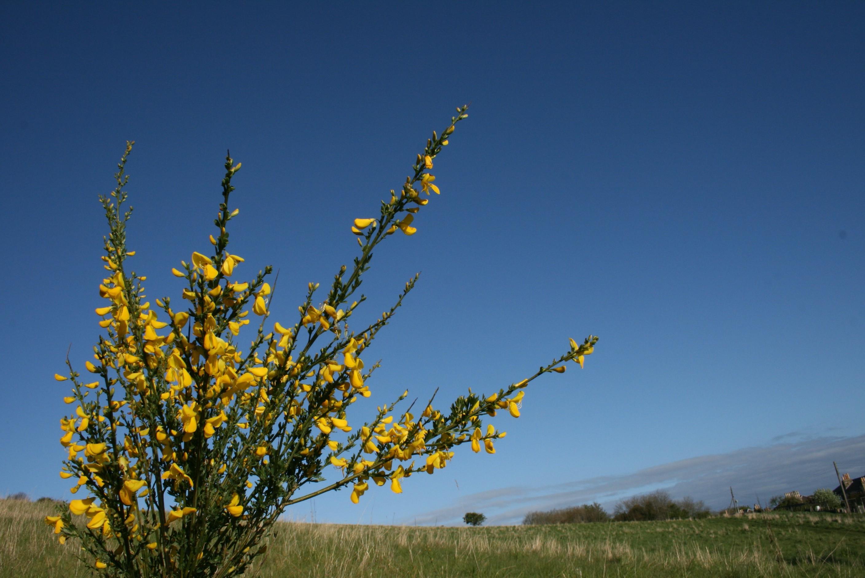 Fiori Gialli Scozia.Sfondi 2816x1880 Px Muschio Natura Scozia Uk Fiori Gialli