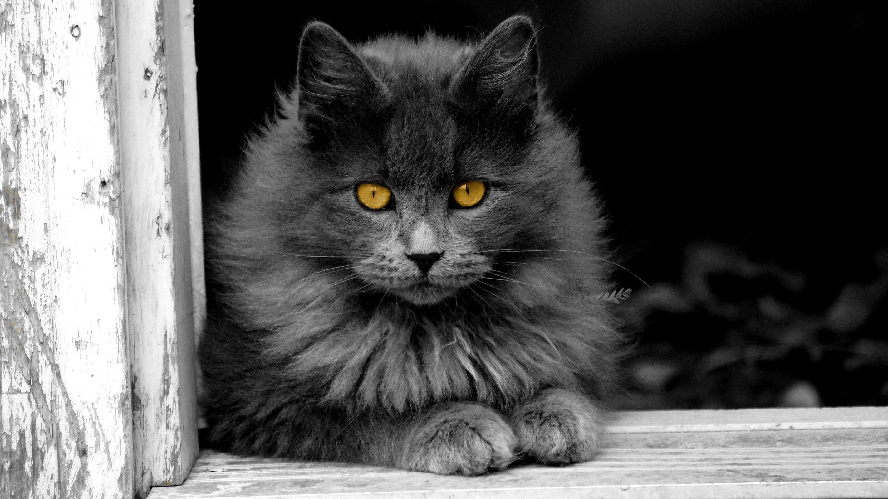 960+ Gambar Hewan Kucing Mewarnai Gratis