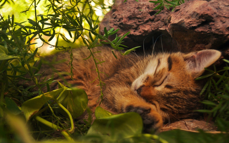 фея картинки на рабочий стол котята в природе приведёт повышению