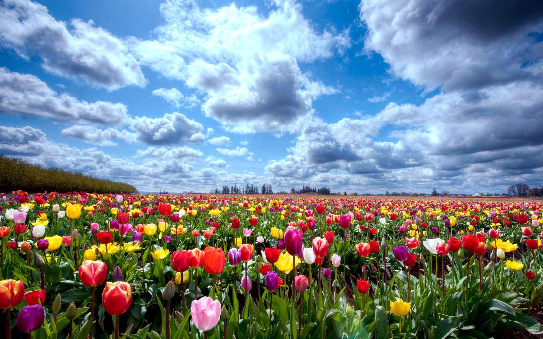 картинки про цветочные поля что белый