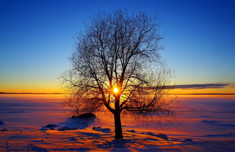 фотосессию красивая картинка с закатом солнца зима современный распиаренный