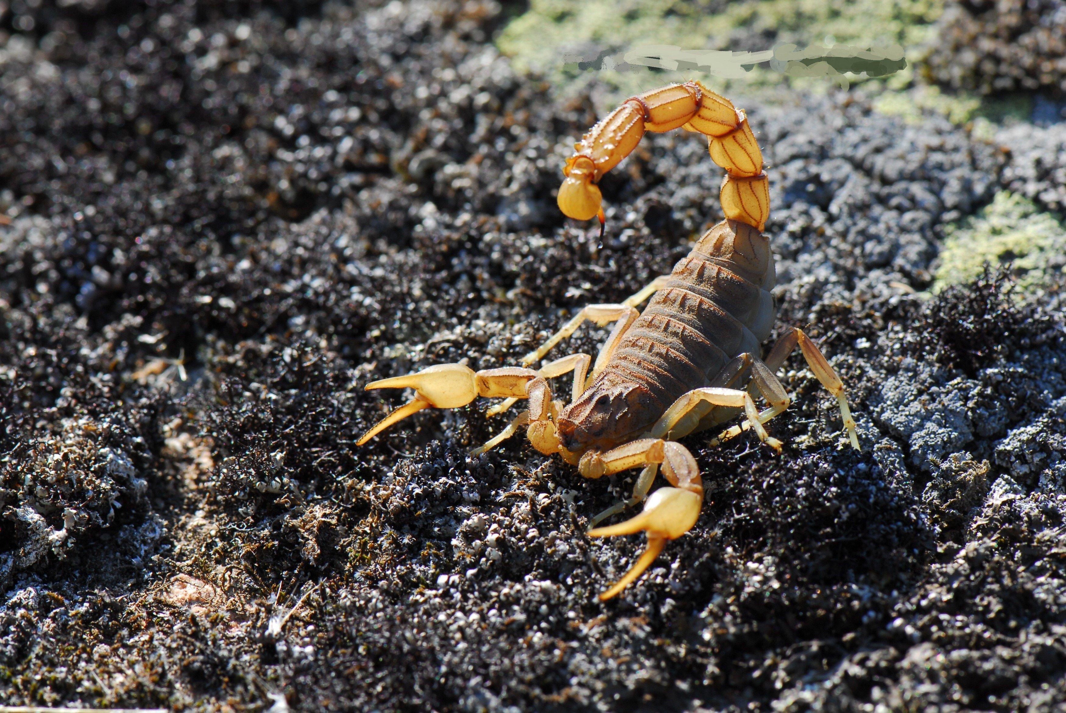 добираясь фотографии скорпион лучшие обои то