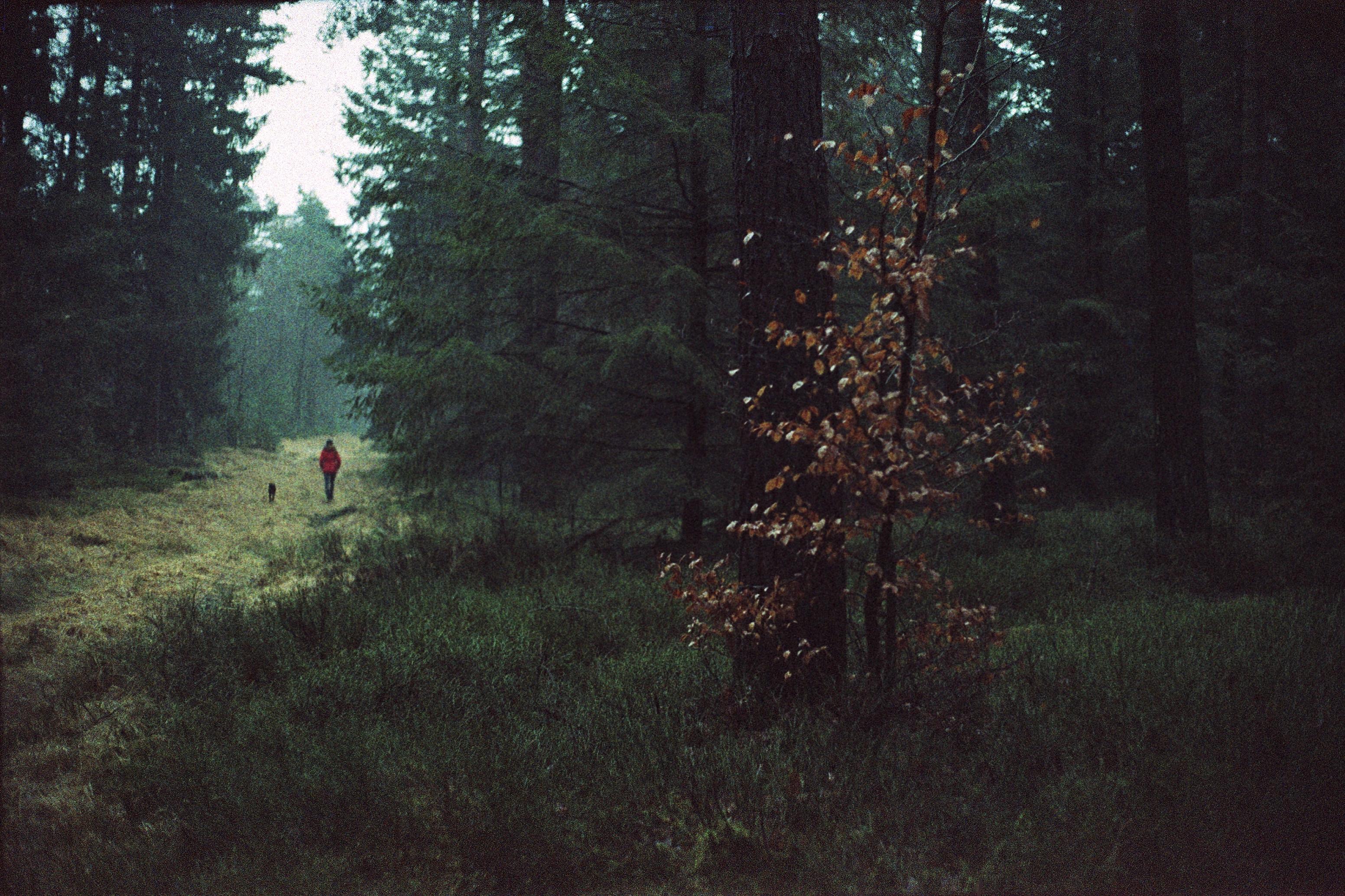 Hintergrundbilder : 35mm farbe film analoge analog