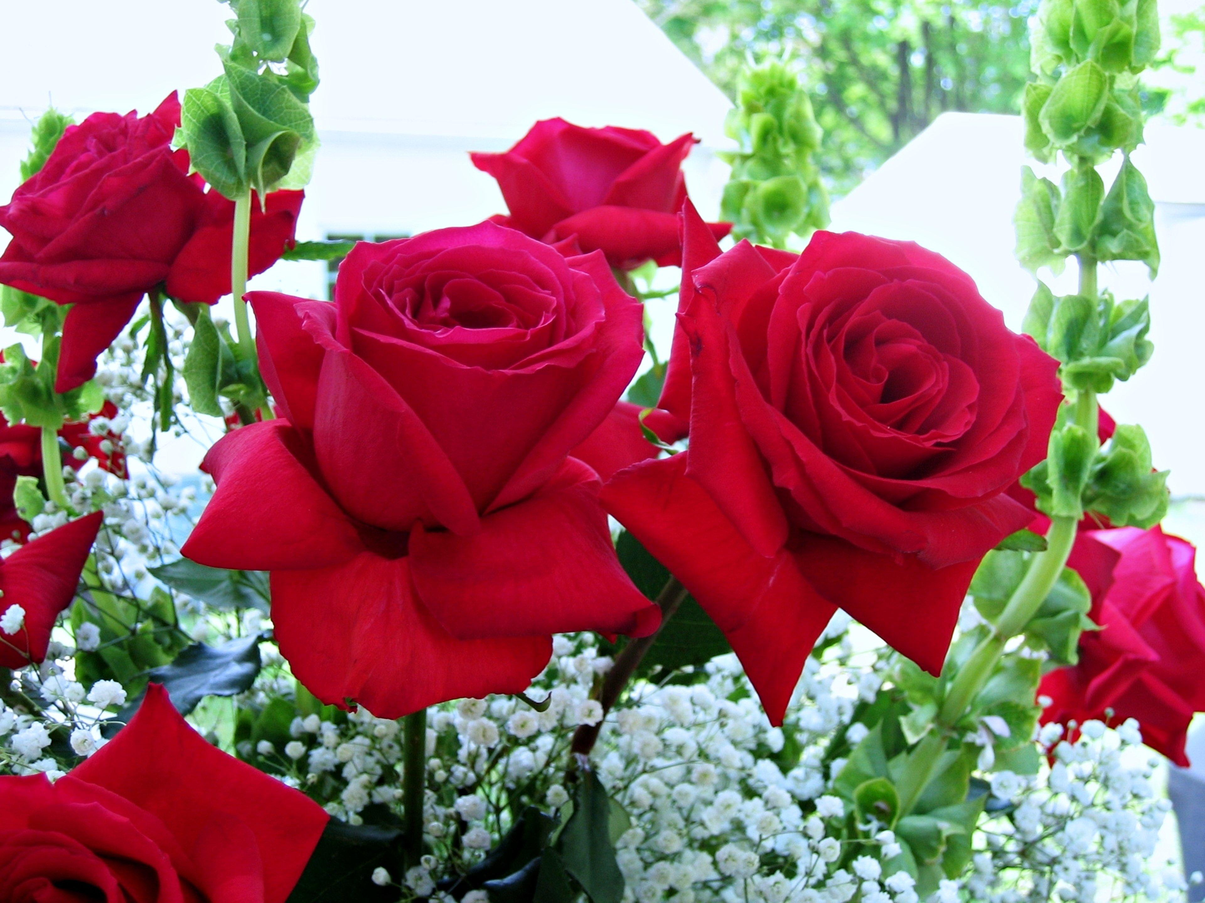 это картинки розы для милой акробатика