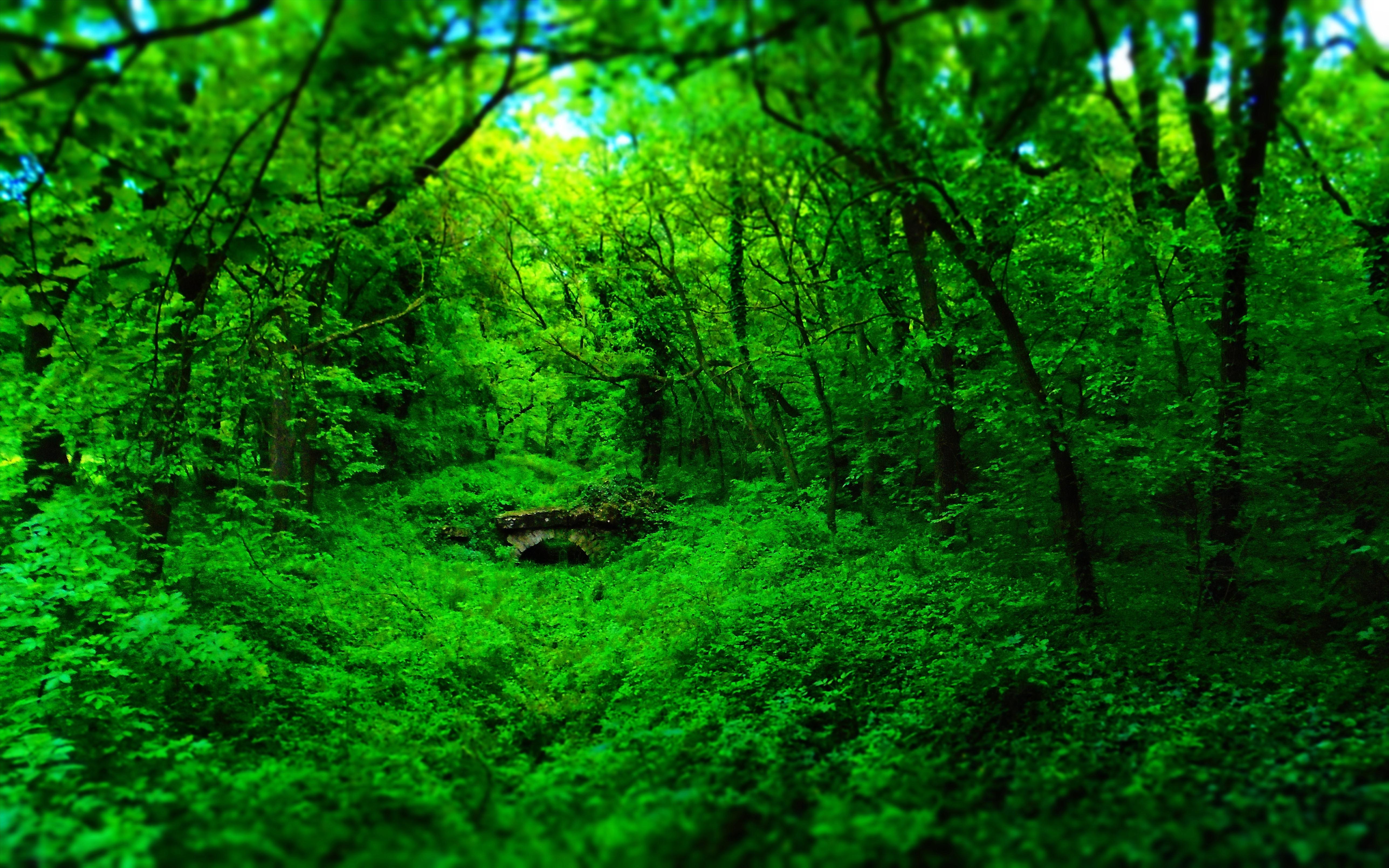 wallpaper : 5152x3220 px, bridge, forest, green, landscape, nature