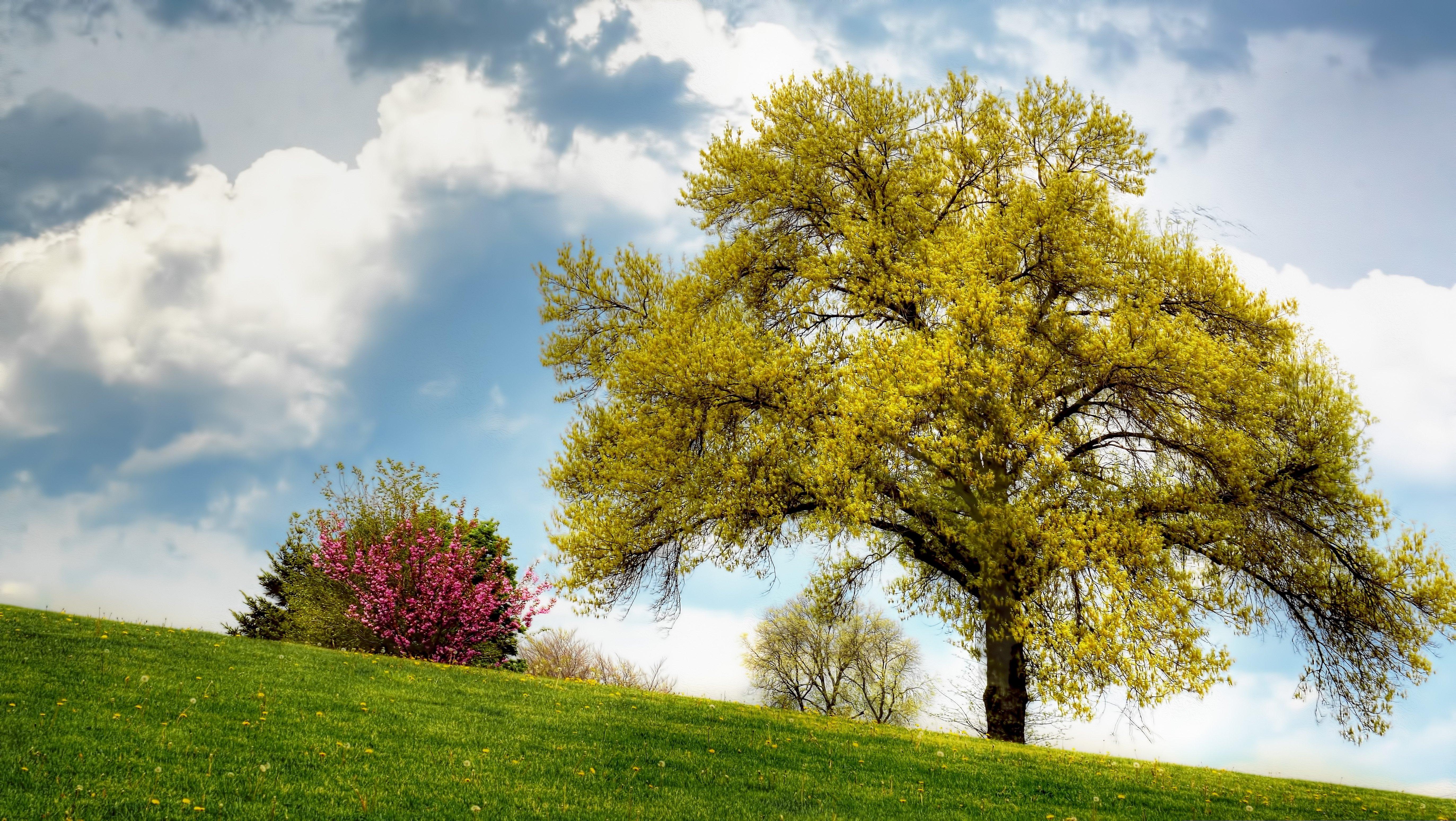 картинки фото деревья кустарники можно тоже