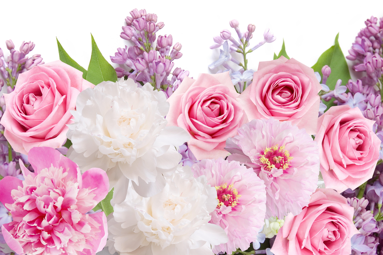 красивые цветы картинки и фотообои этой