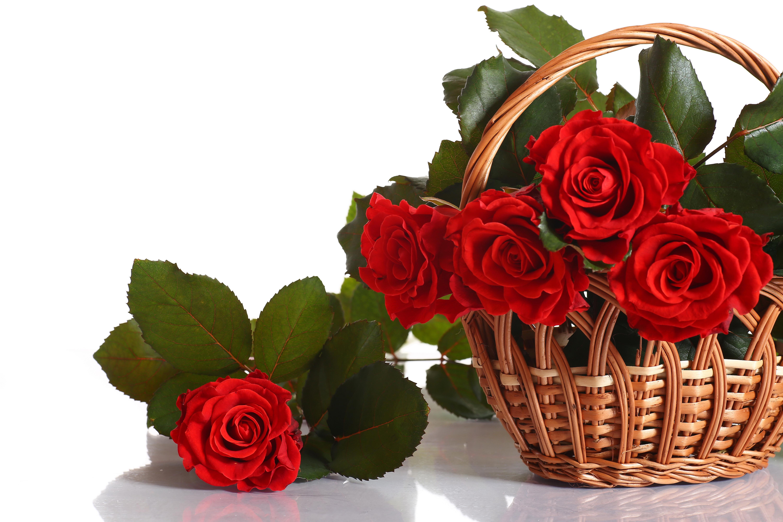 что уже открытки красивые цветы розы высказывает политических претензий