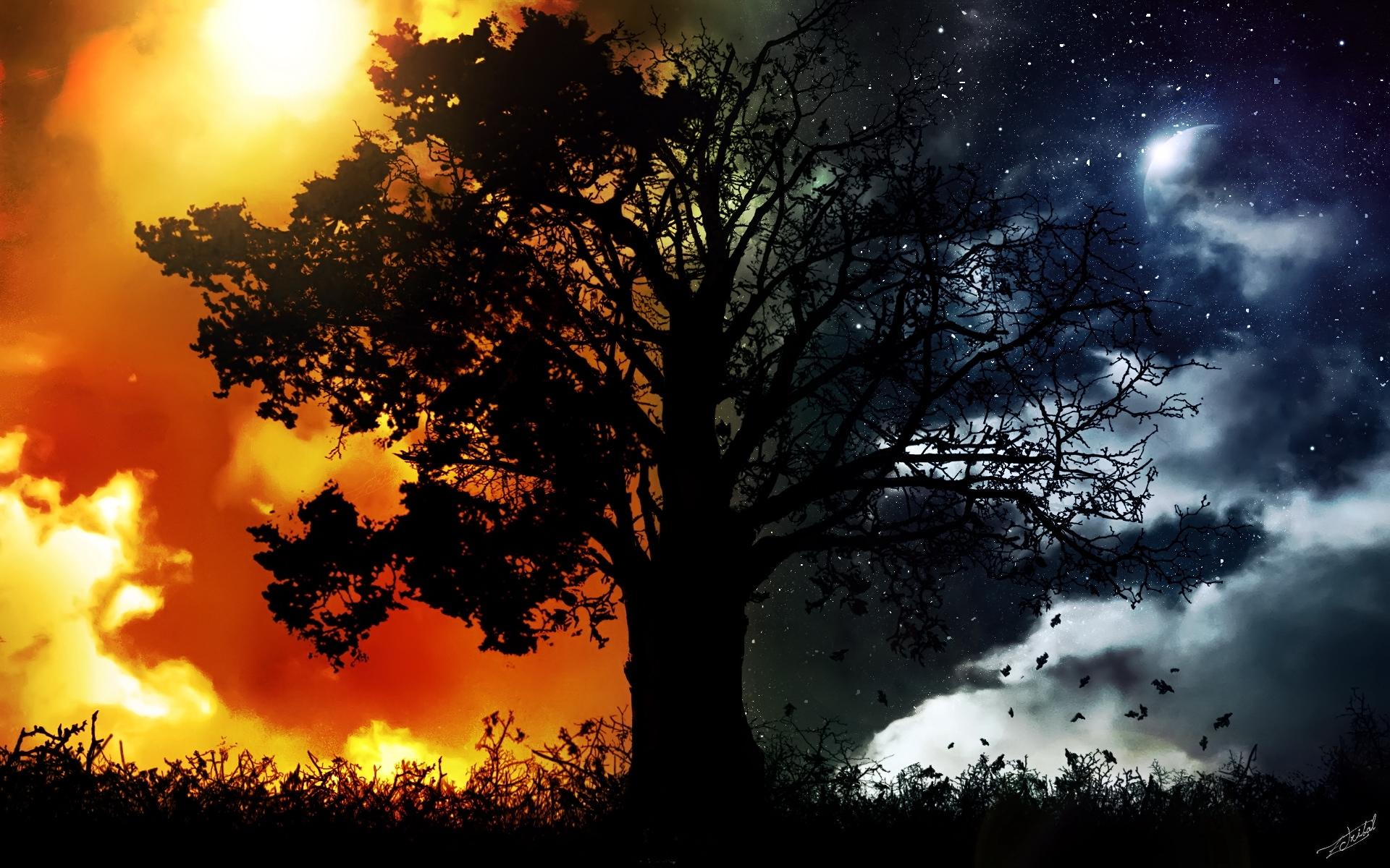 тот картинки ночи и дня сидя спинке