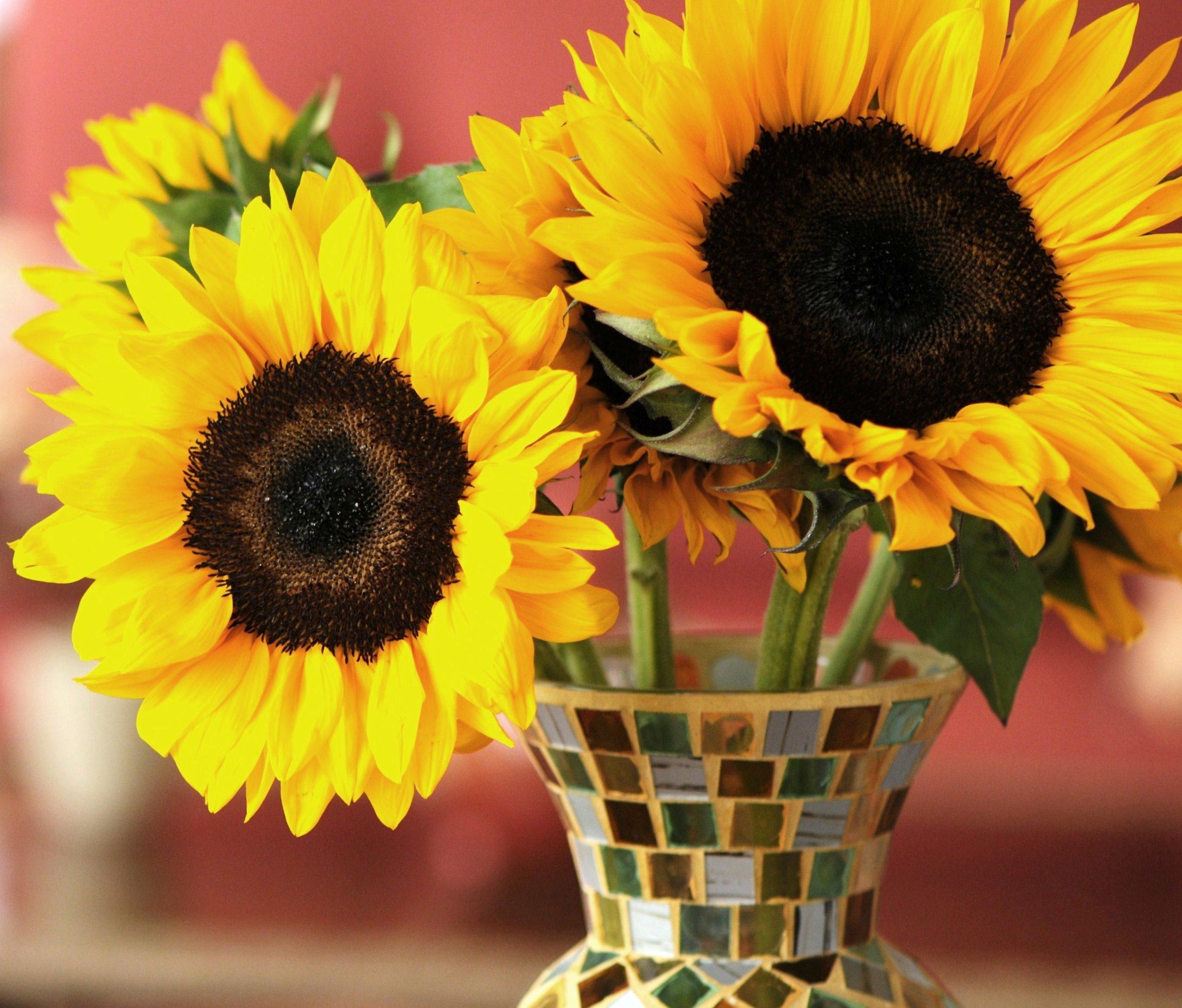 вот кто фото картинки цветы подсолнухи в вазах примерно